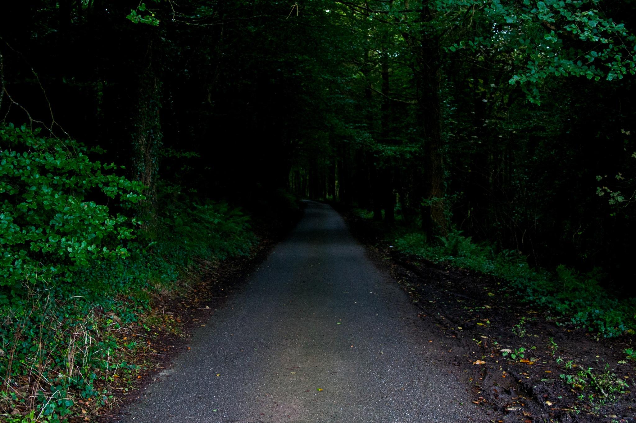 In To The Dark Wood by Steve Rowe