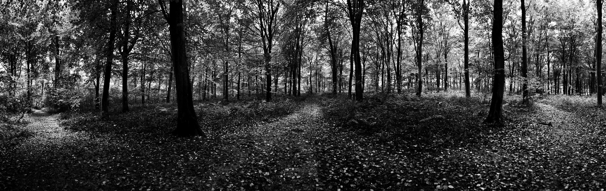 Dividing Paths by Tony Gaitskell
