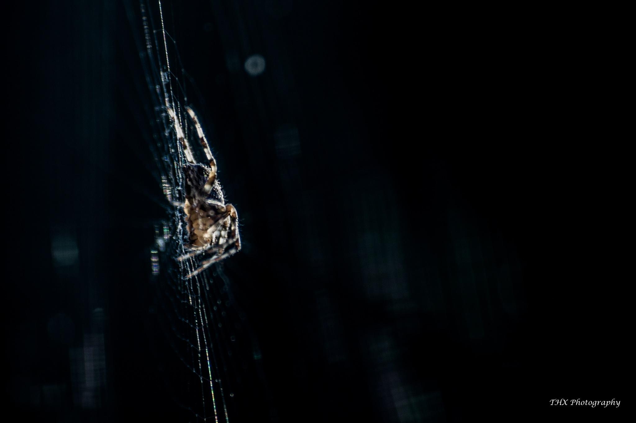 Morning spider by Yves Teyssier