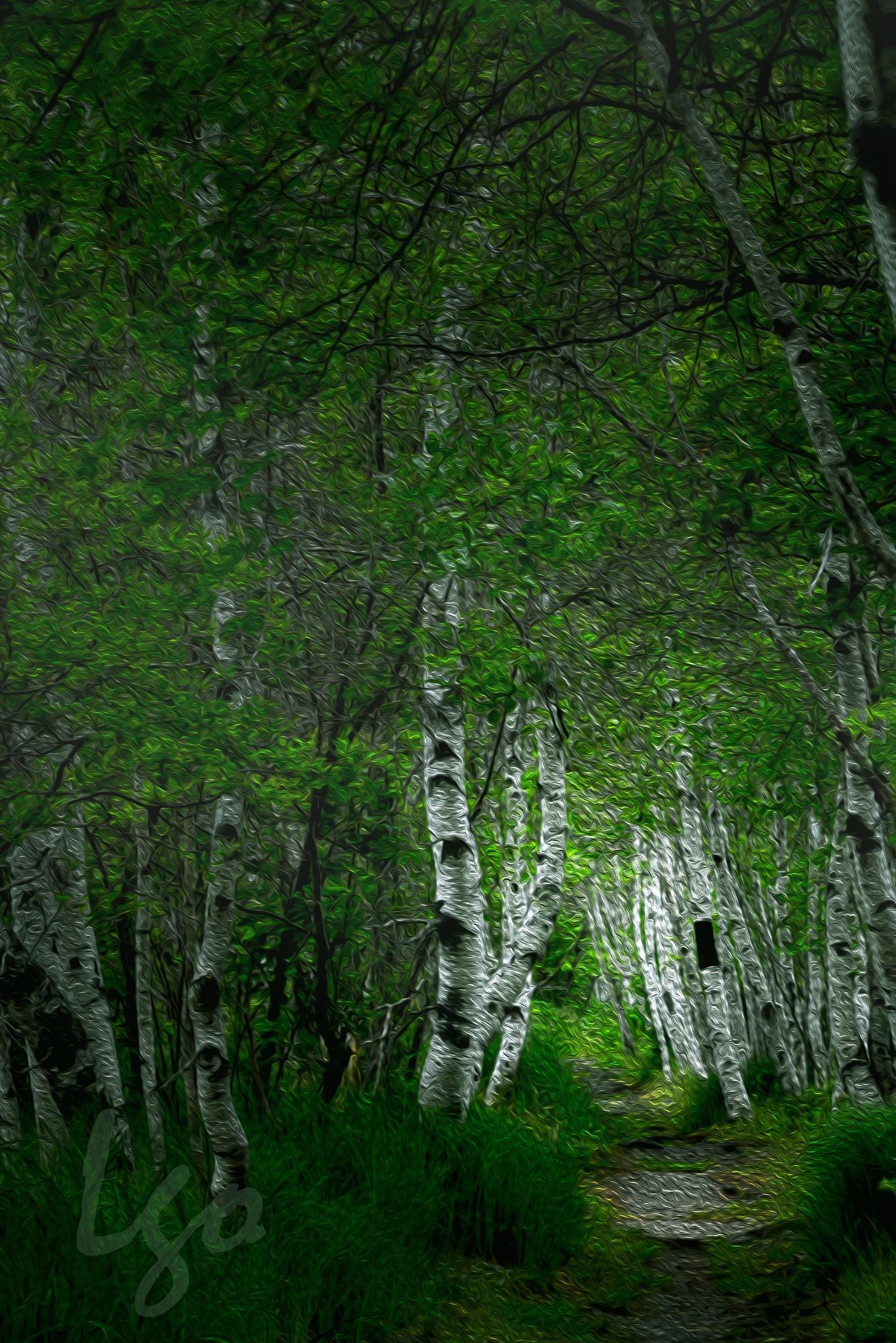 Birch Tree by Leyana