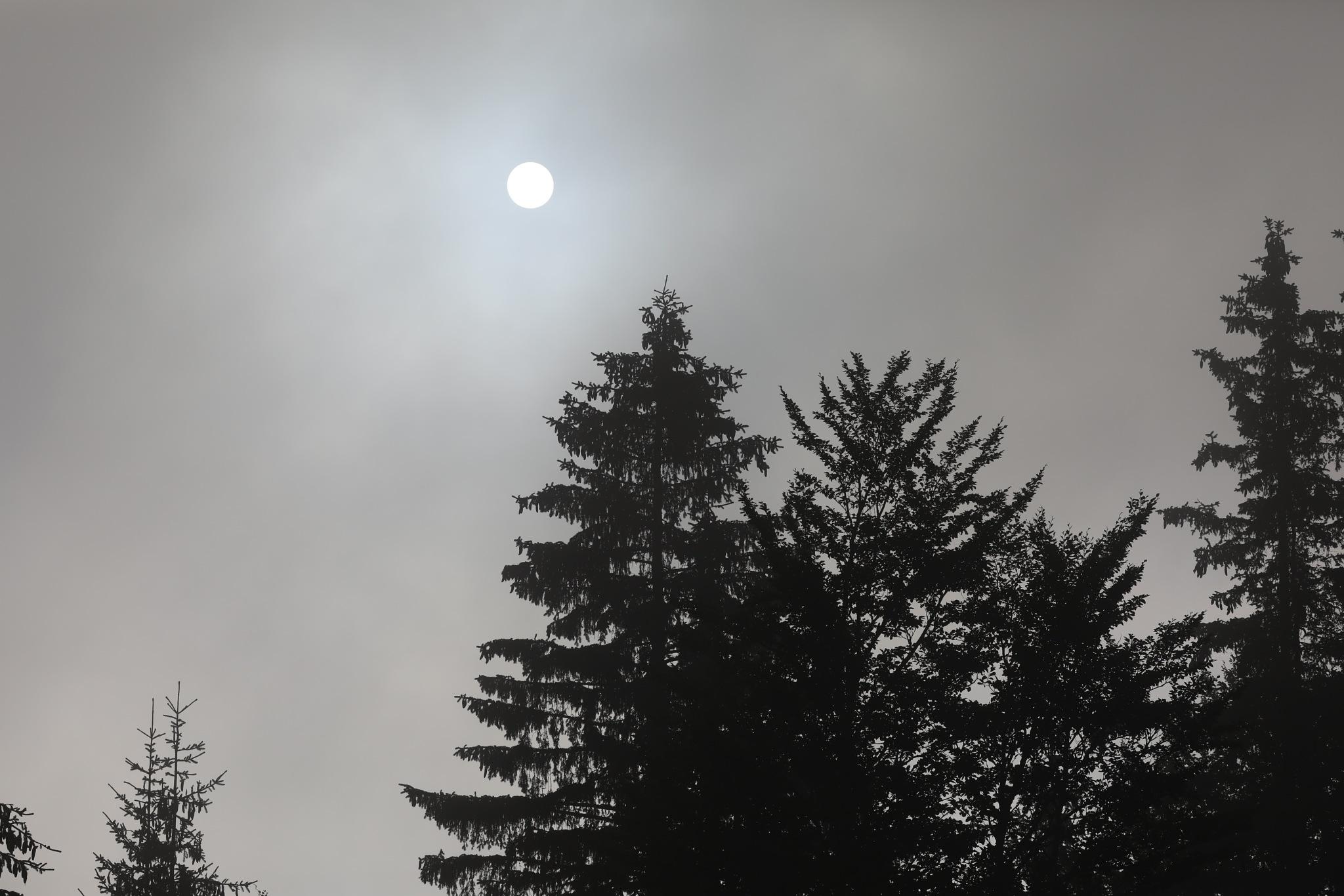 Foggy Morning by deya