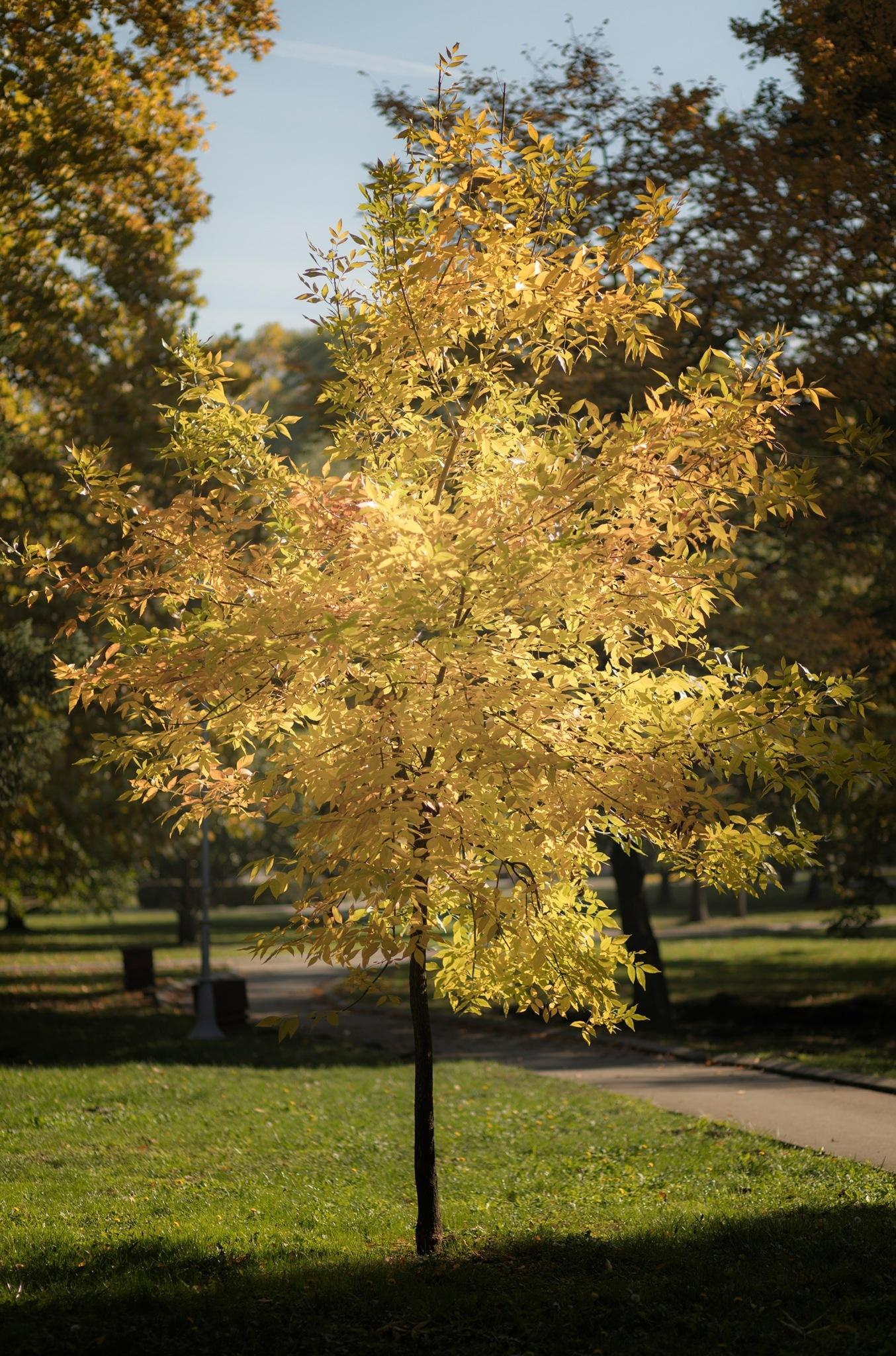 Autumn by deya