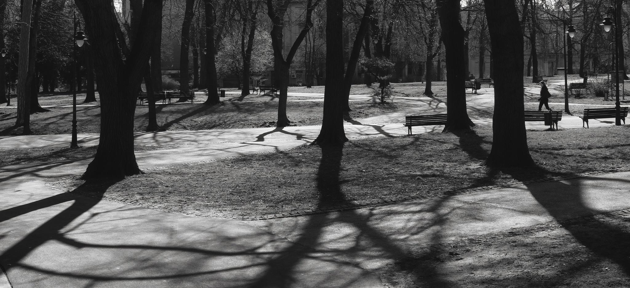 Sppring shadows by deya