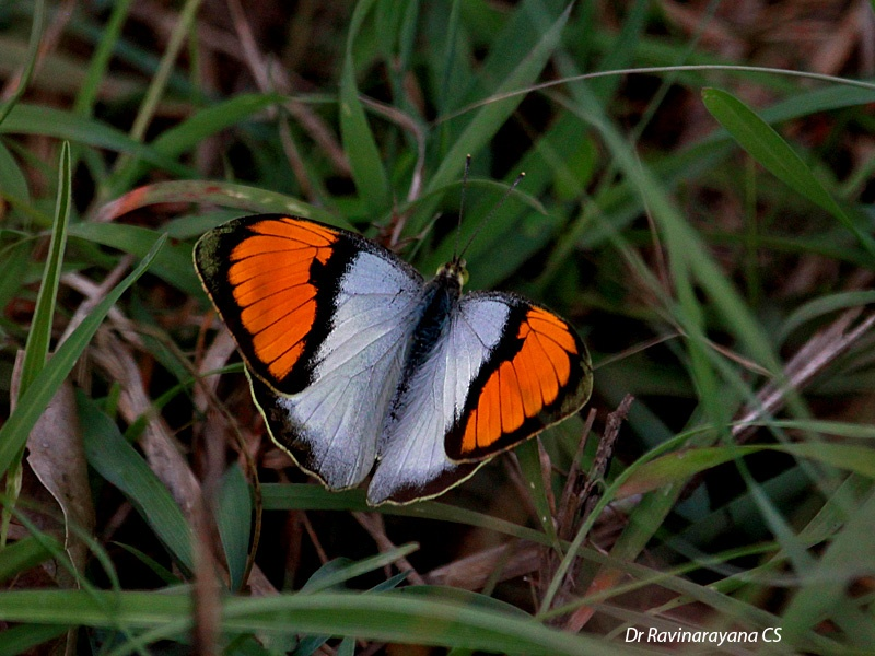Photo in Random #nature + butterflies+ insects