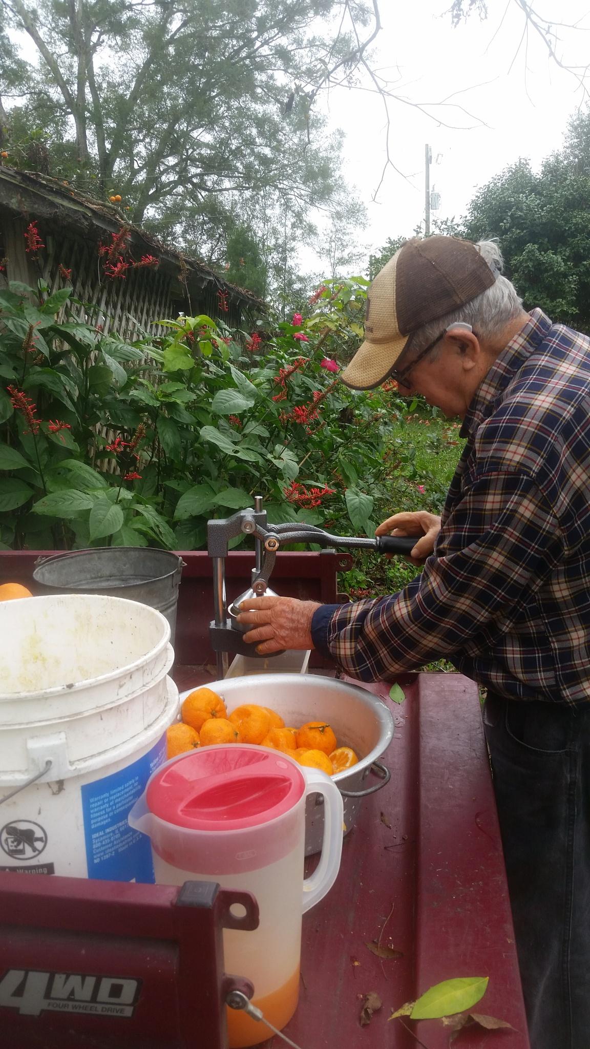 Juicing tangerines  by Ed Barron