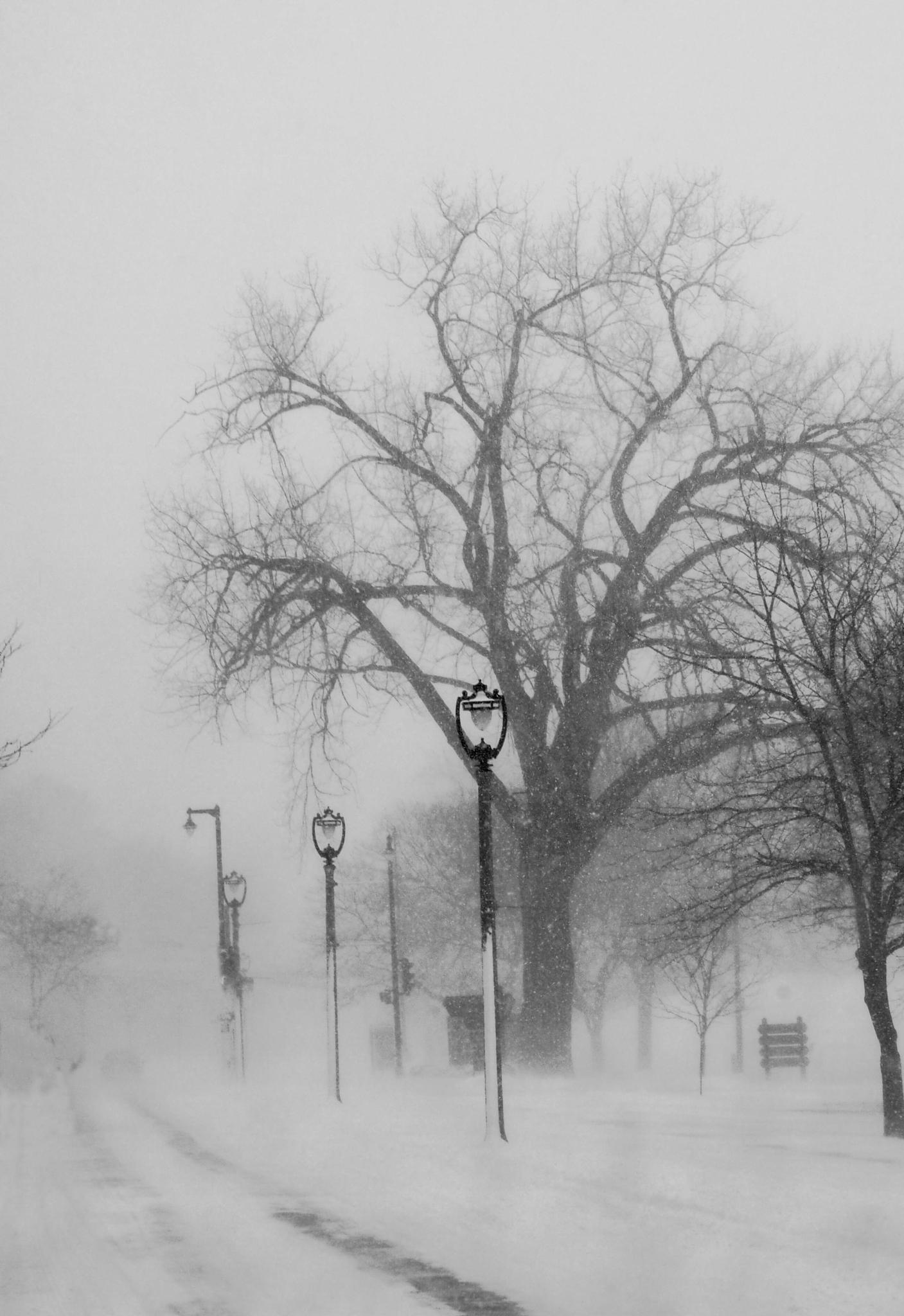 Blizzard conditions by Christine Grubbs