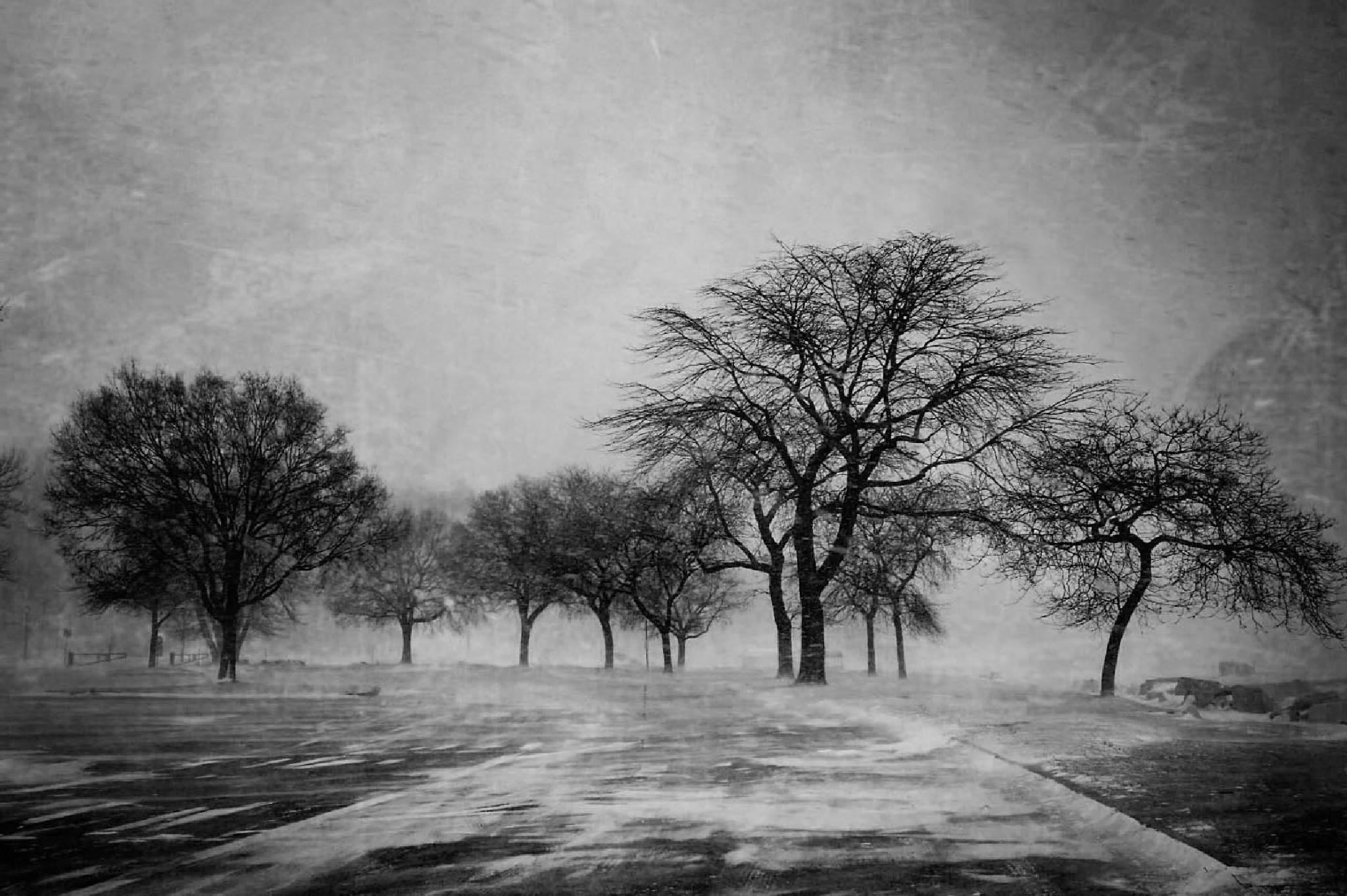 snow storm by Christine Grubbs