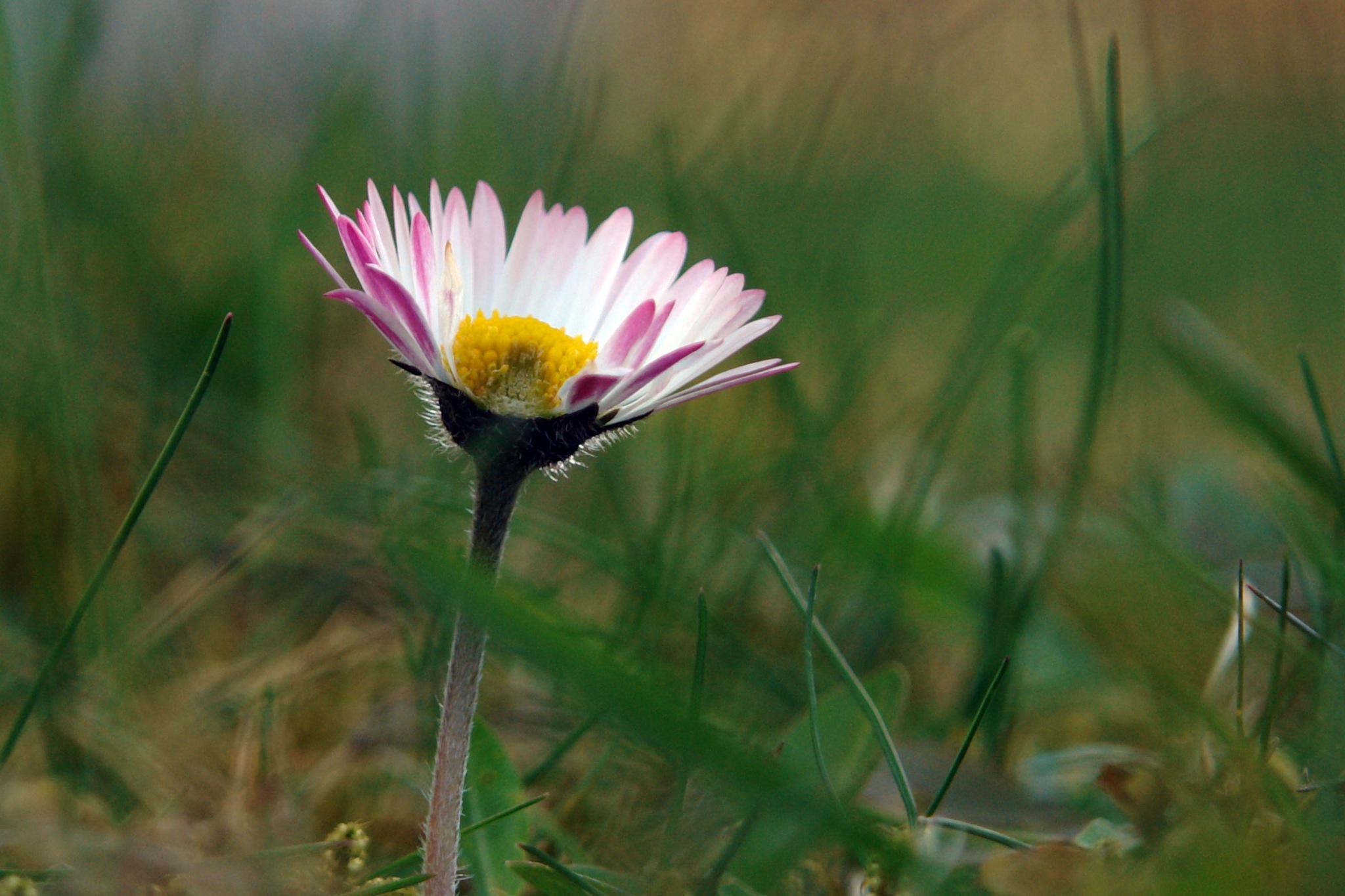 Frühling im Garten 2 by gordana1000