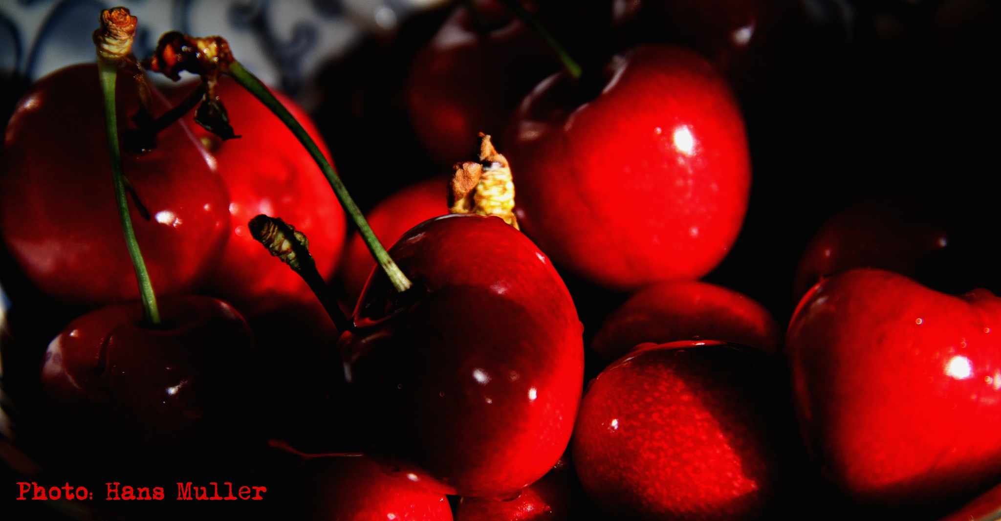 Cherry by Hans Andreas Alexander Müller