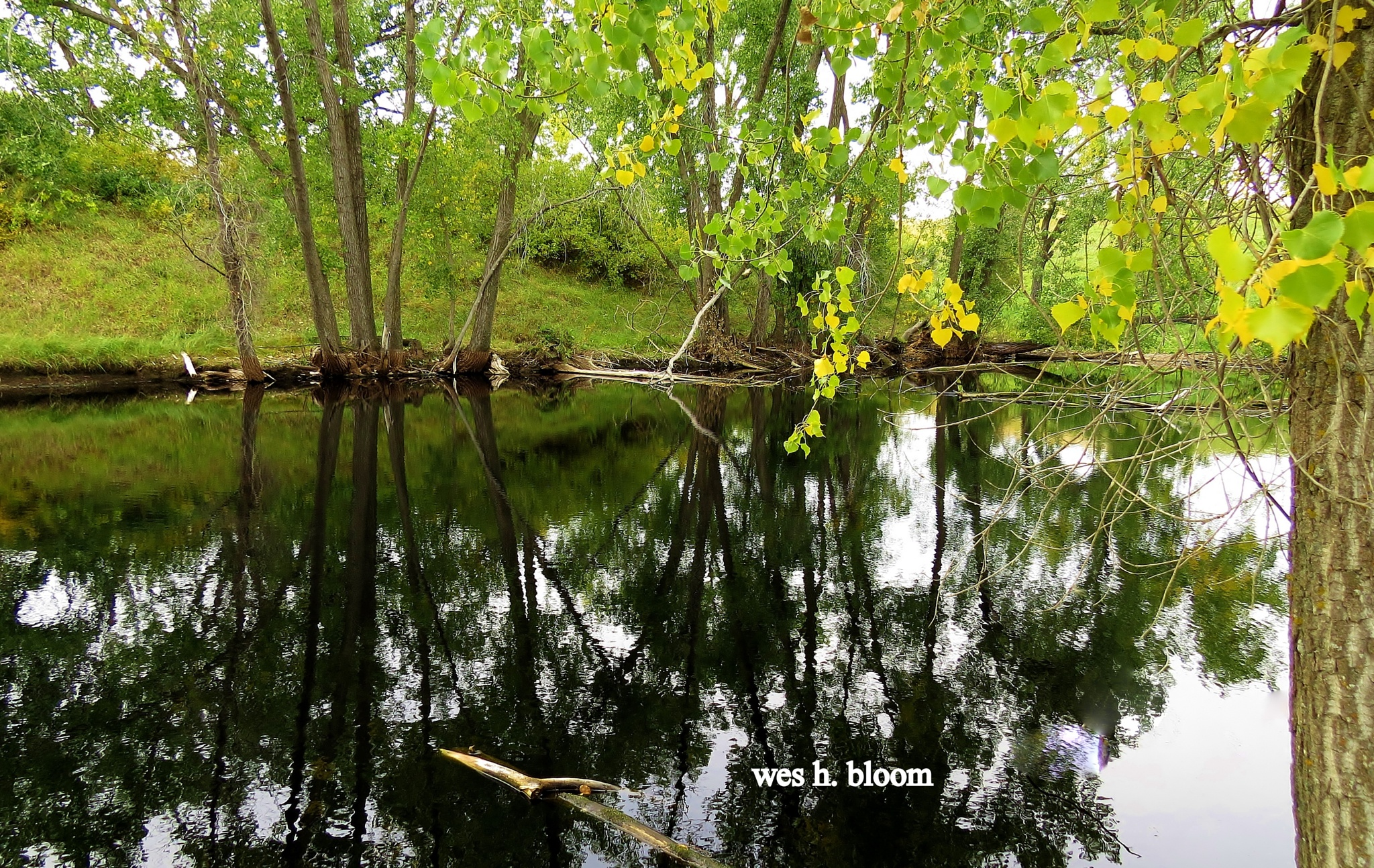 THE LITTLE POND by Wes Bloom
