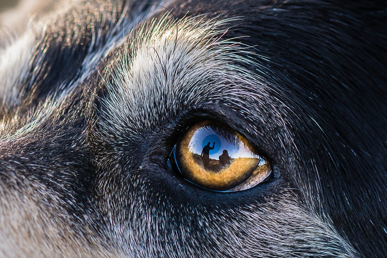 Eye contact by mossienet