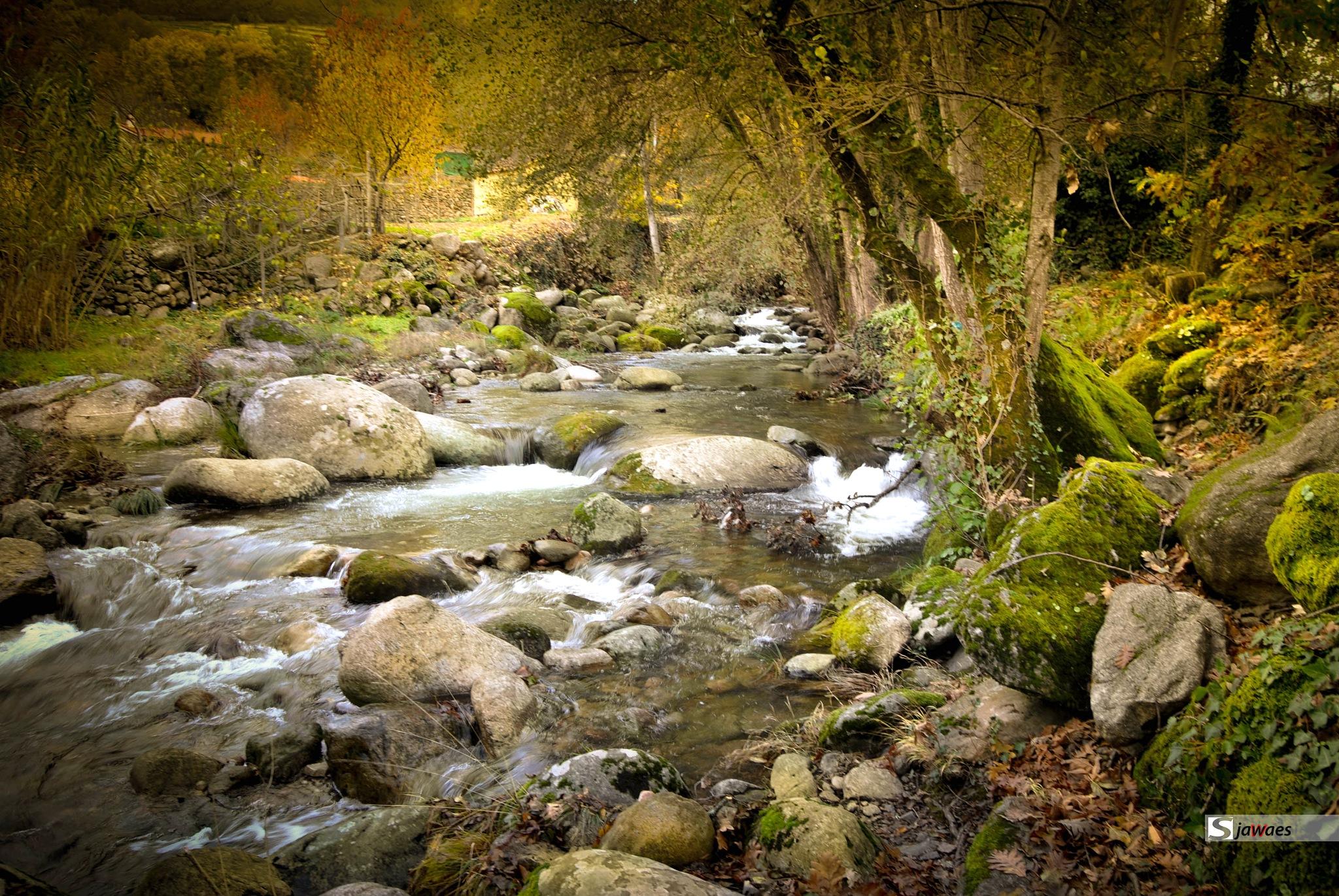 the river by Javier Sanz Perez