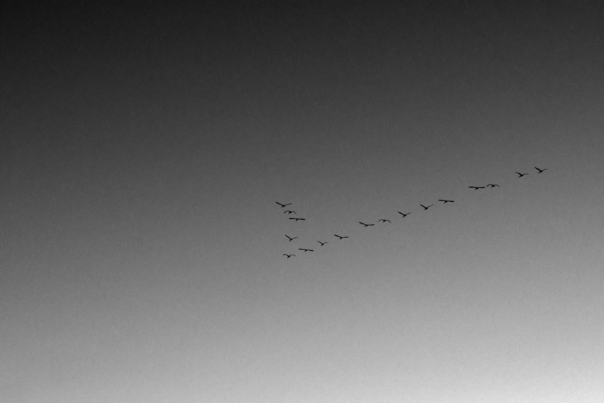 Photo in Fine Art #nature #animals #birds #flying #art #lapland #arctic #taiga #beauty #mood