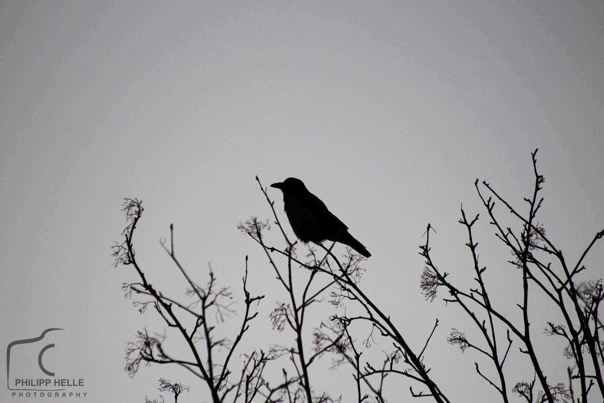 Bird  by Philipp Helle Photography