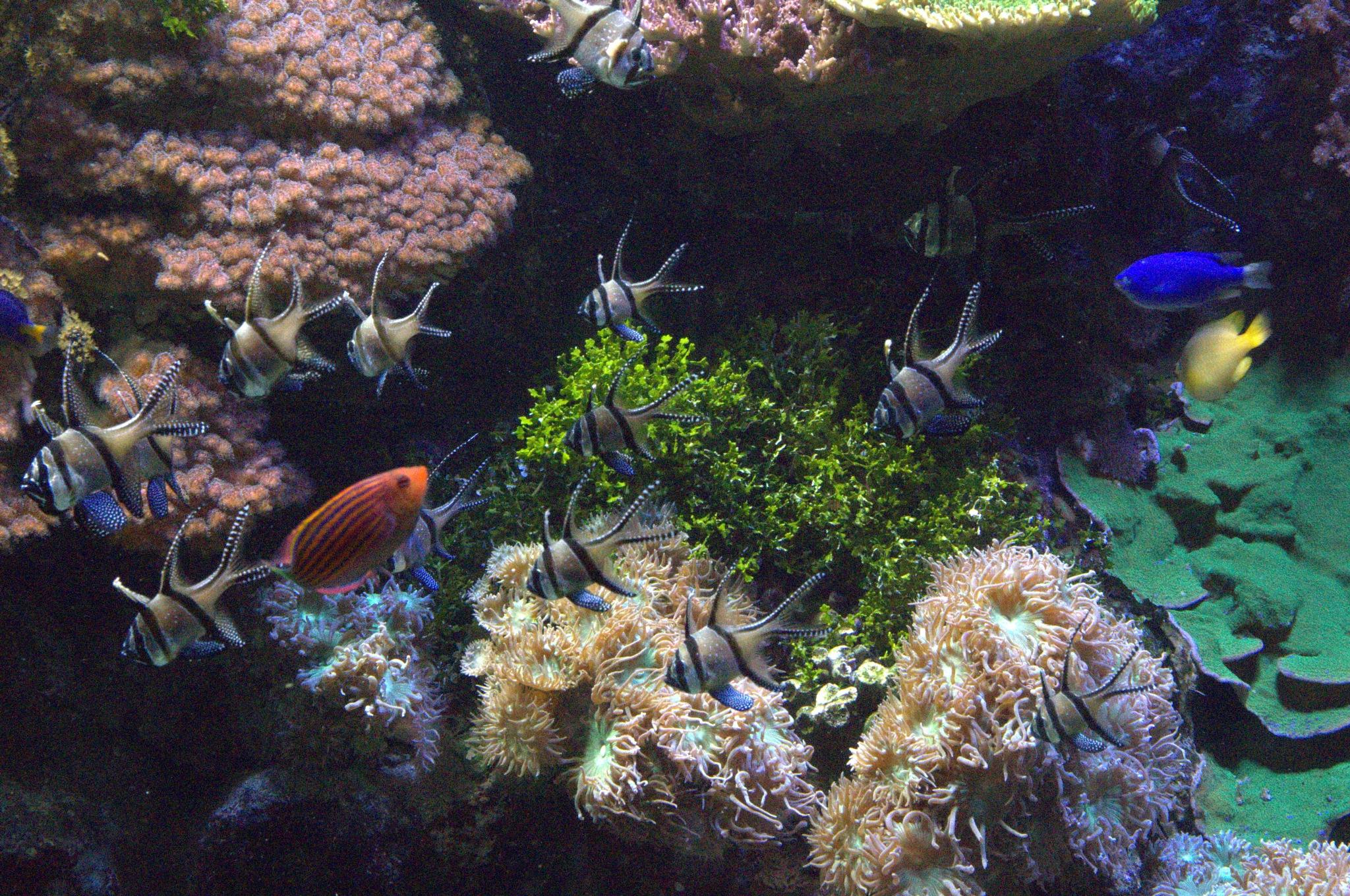 Genova=Aquarium  by EdwardStern