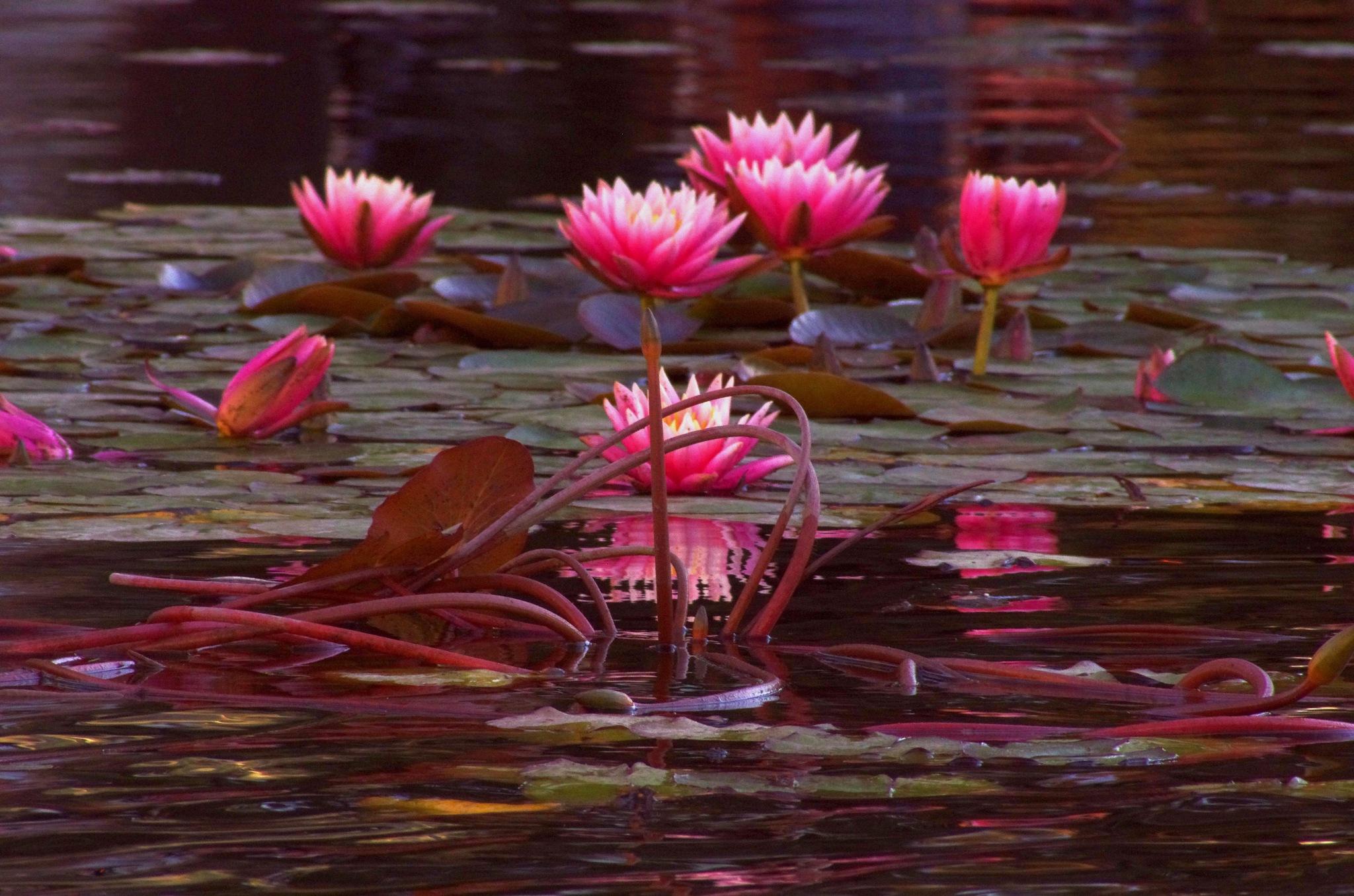 Pond Scene by EdwardStern