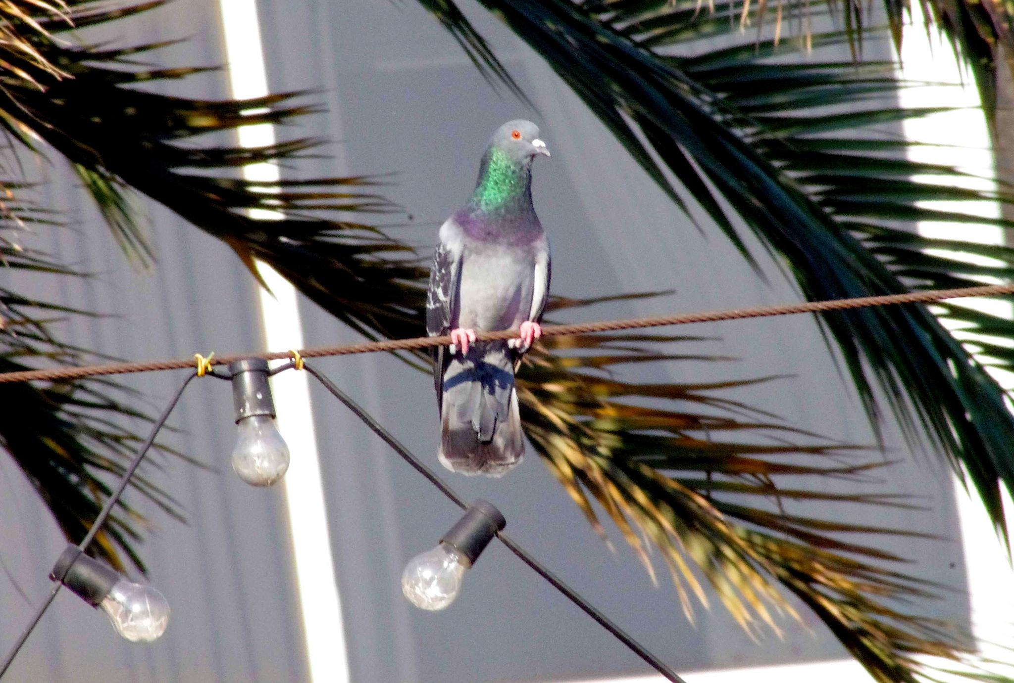 Bird on a Wire by EdwardStern