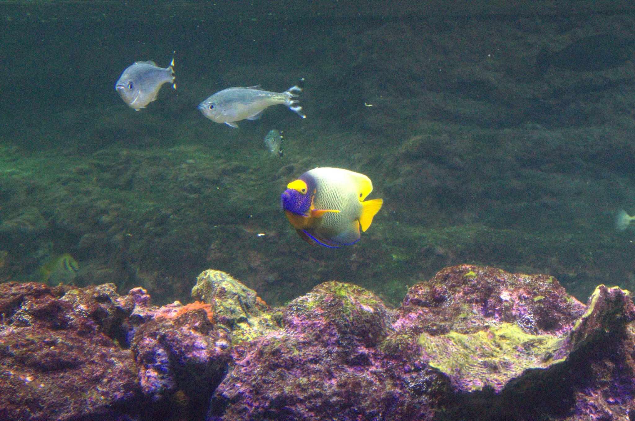 Genova-Aquarium by EdwardStern