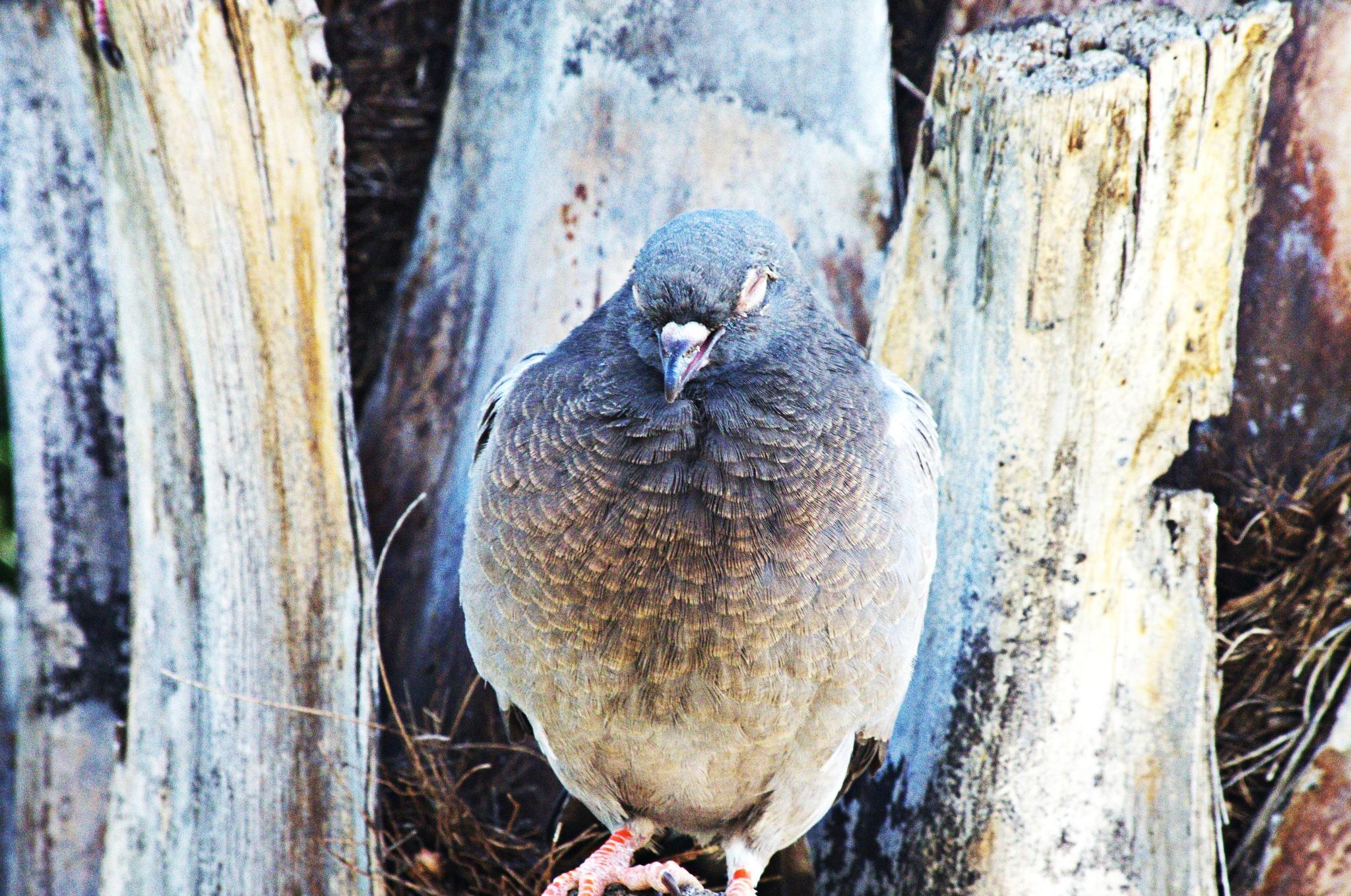 Bird Shot in RAW 76 by EdwardStern