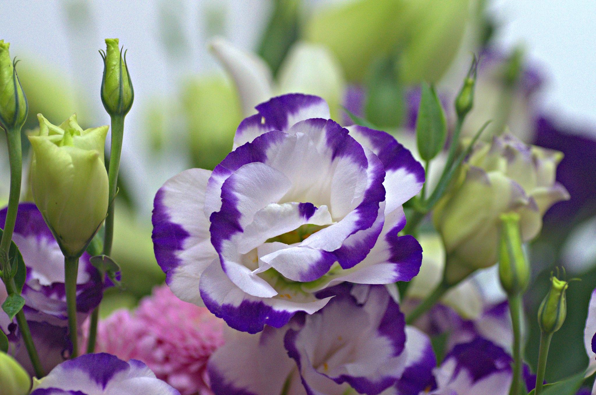 Lots of Flowers by EdwardStern
