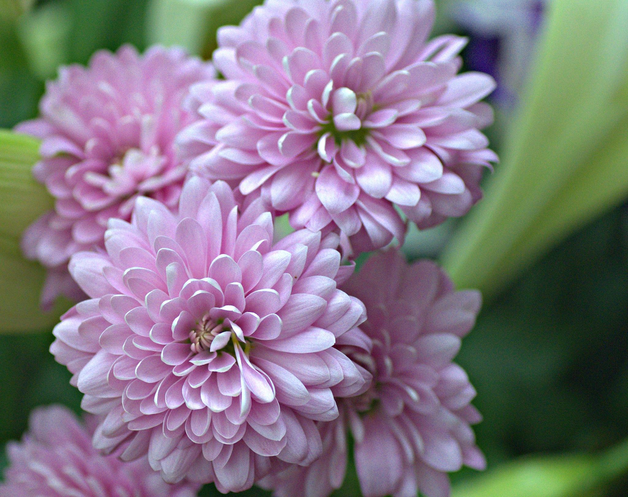 flowers 3 by EdwardStern