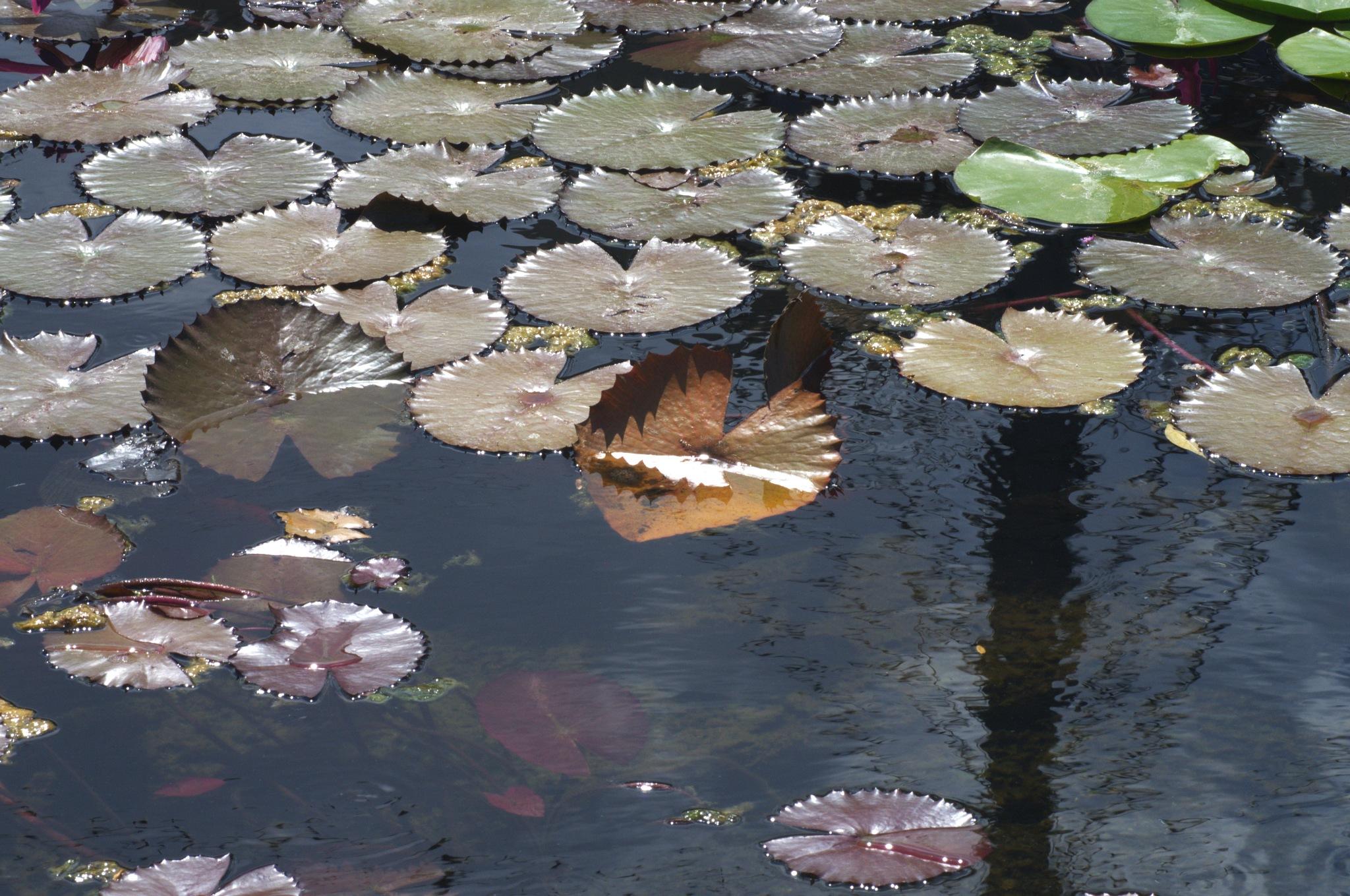 Pond Shot 205 by EdwardStern