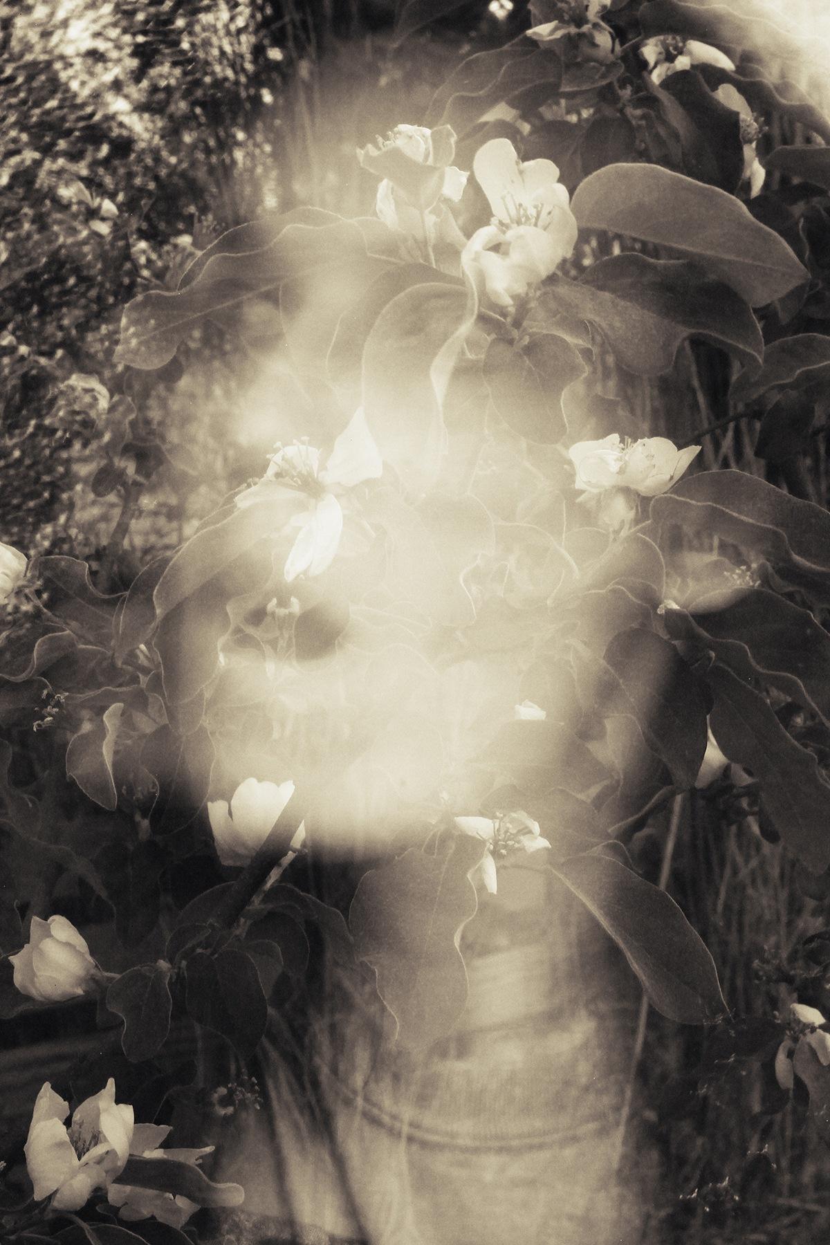 Flores de membrillo by barbarabezina