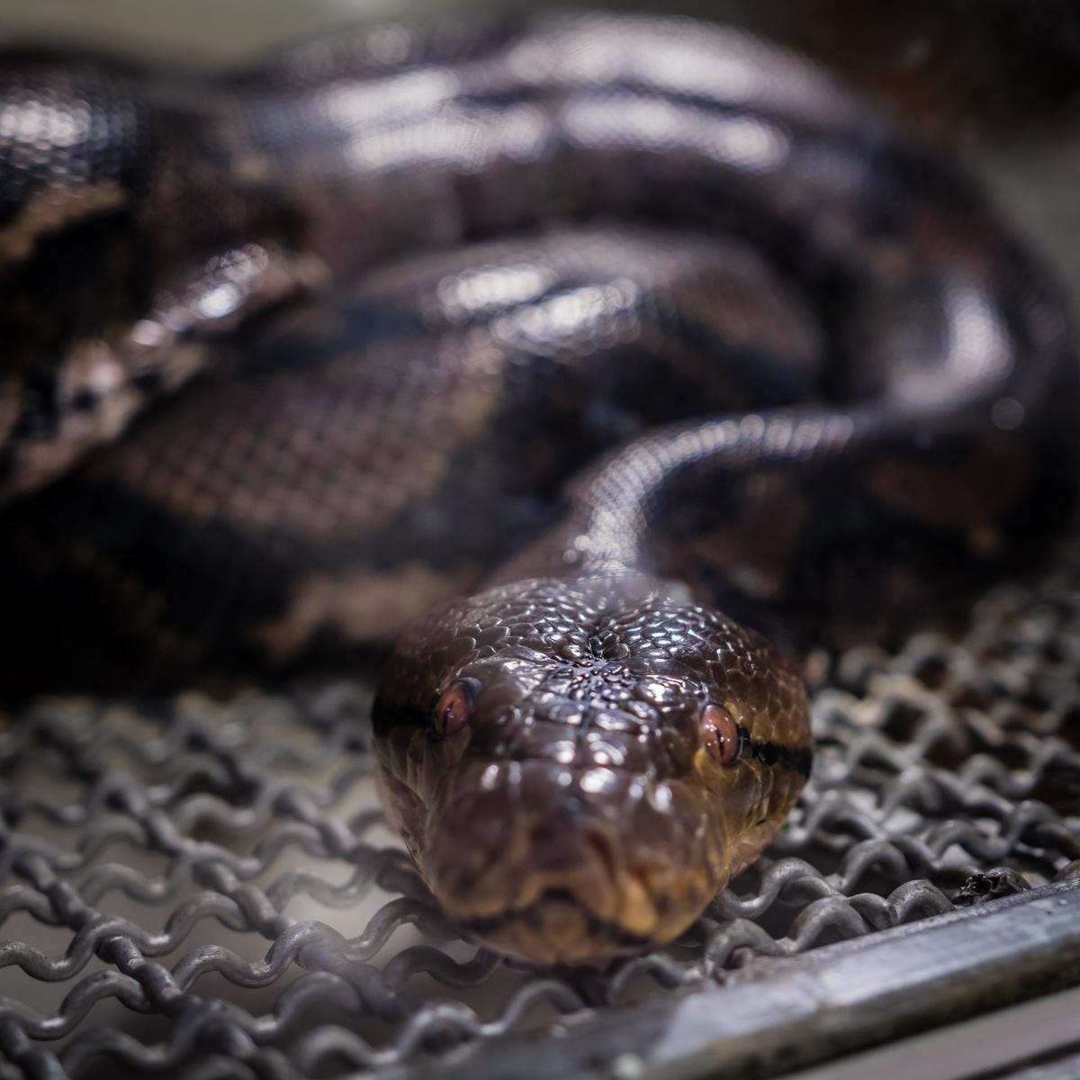 Snake by Yaroslav Sobko