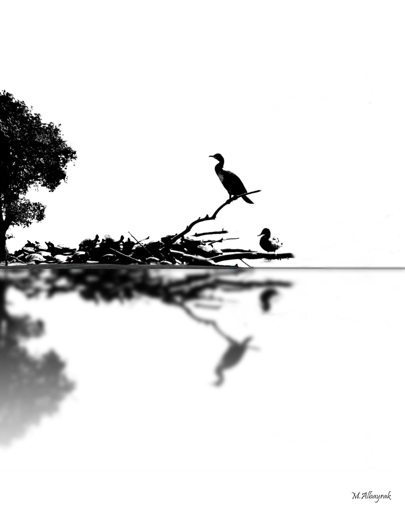 Untitled by Mehmet Albayrak