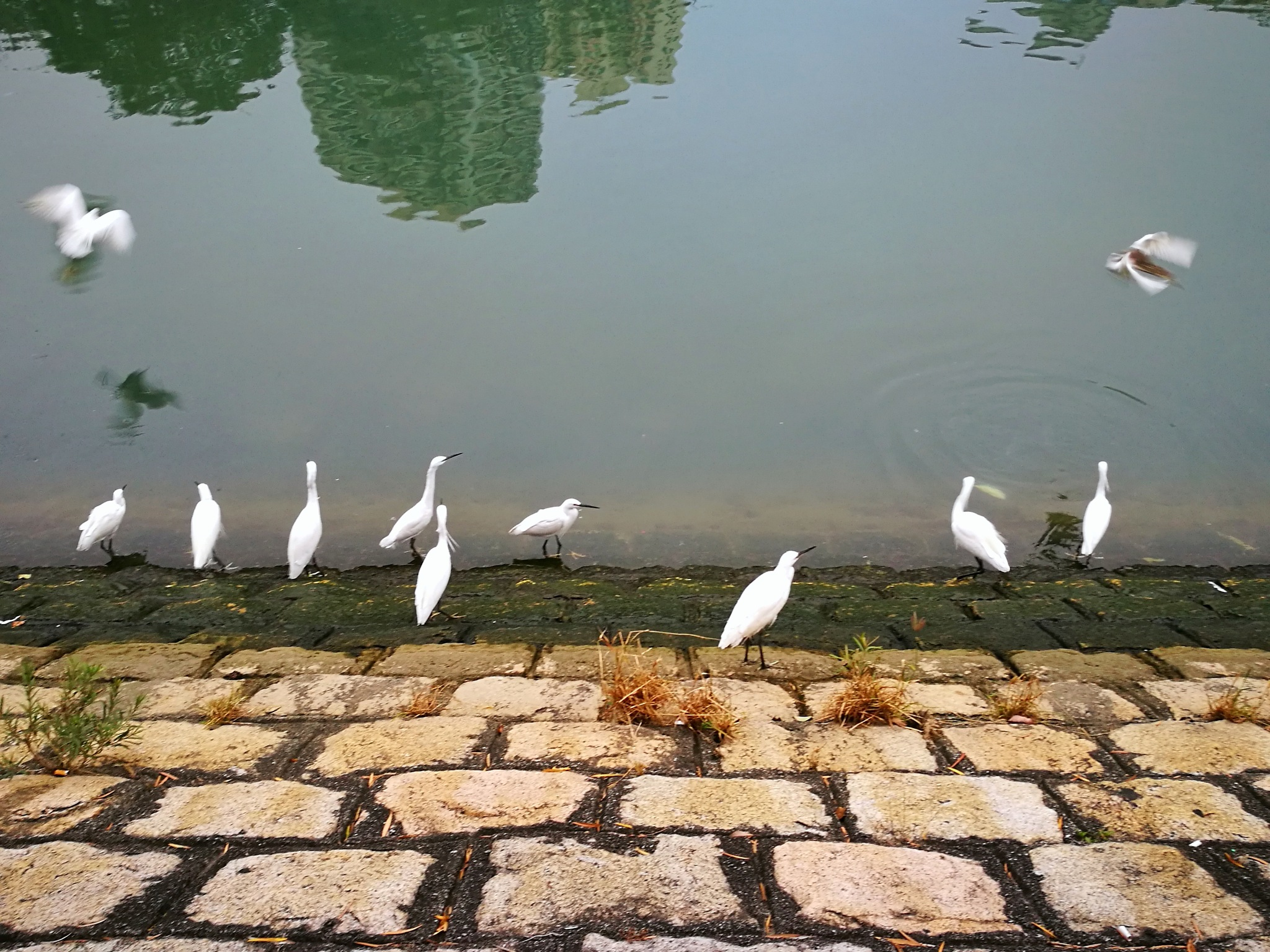White birds 04 by leocary