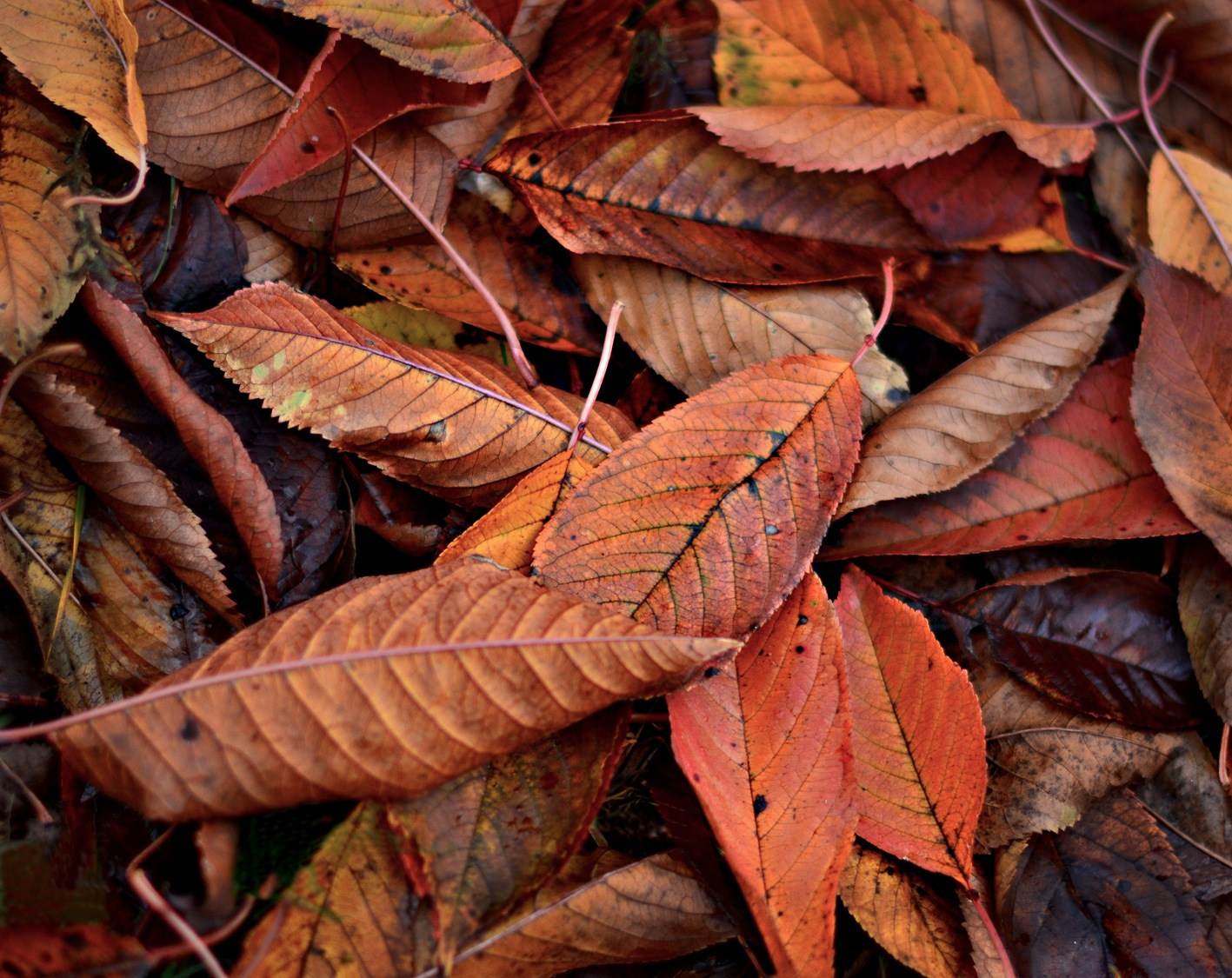 Leaves 3 by Mirza Cengic