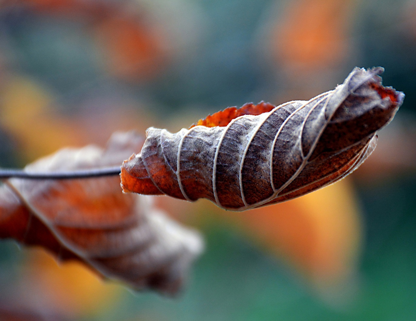 Leaf in Autumn 3 by Mirza Cengic
