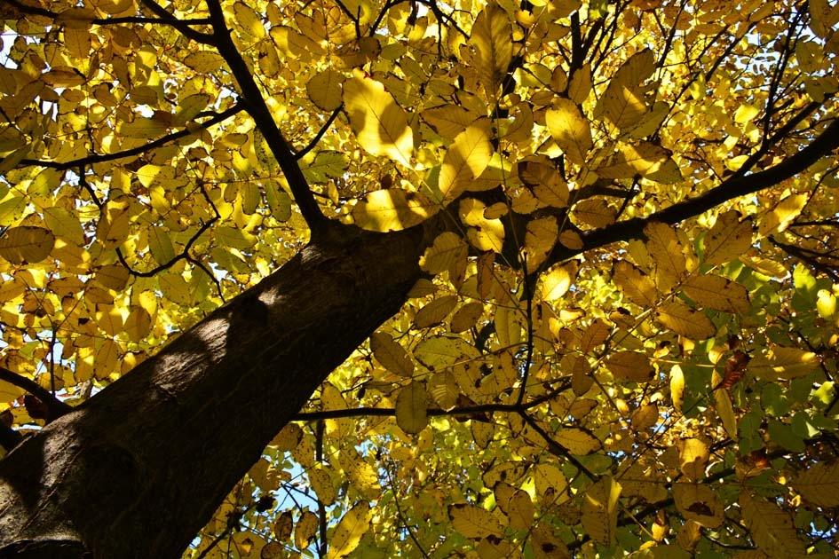 Autumn 4 by Mirza Cengic