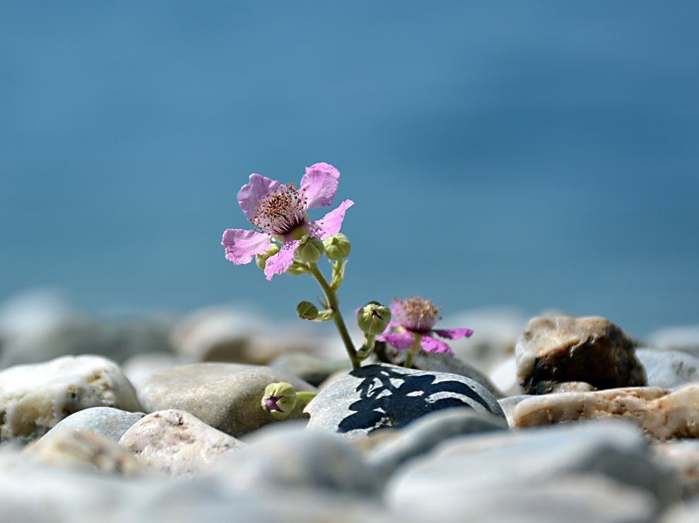 Forgotten flower by Mirza Cengic