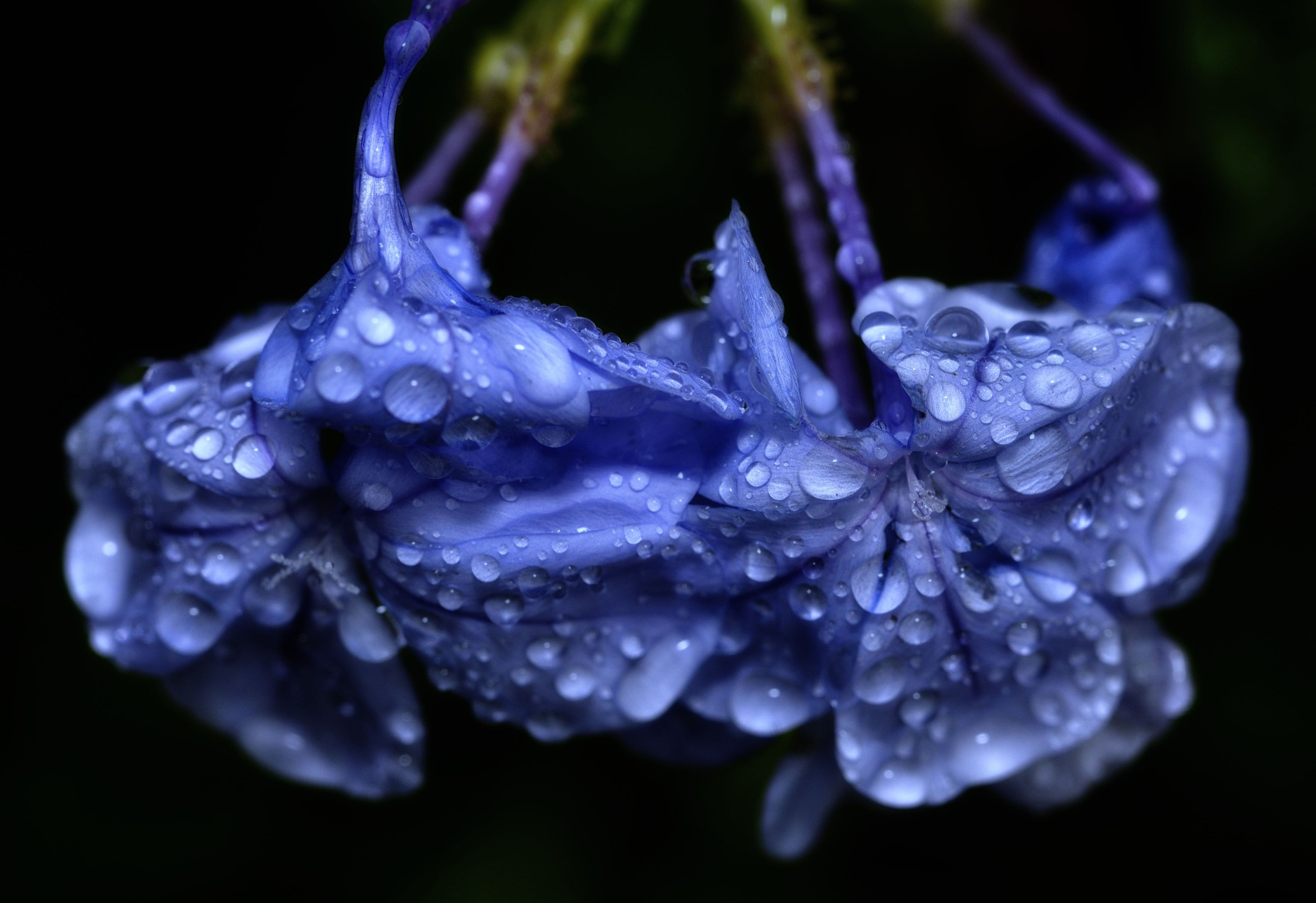 Blue by SheilaPatterson