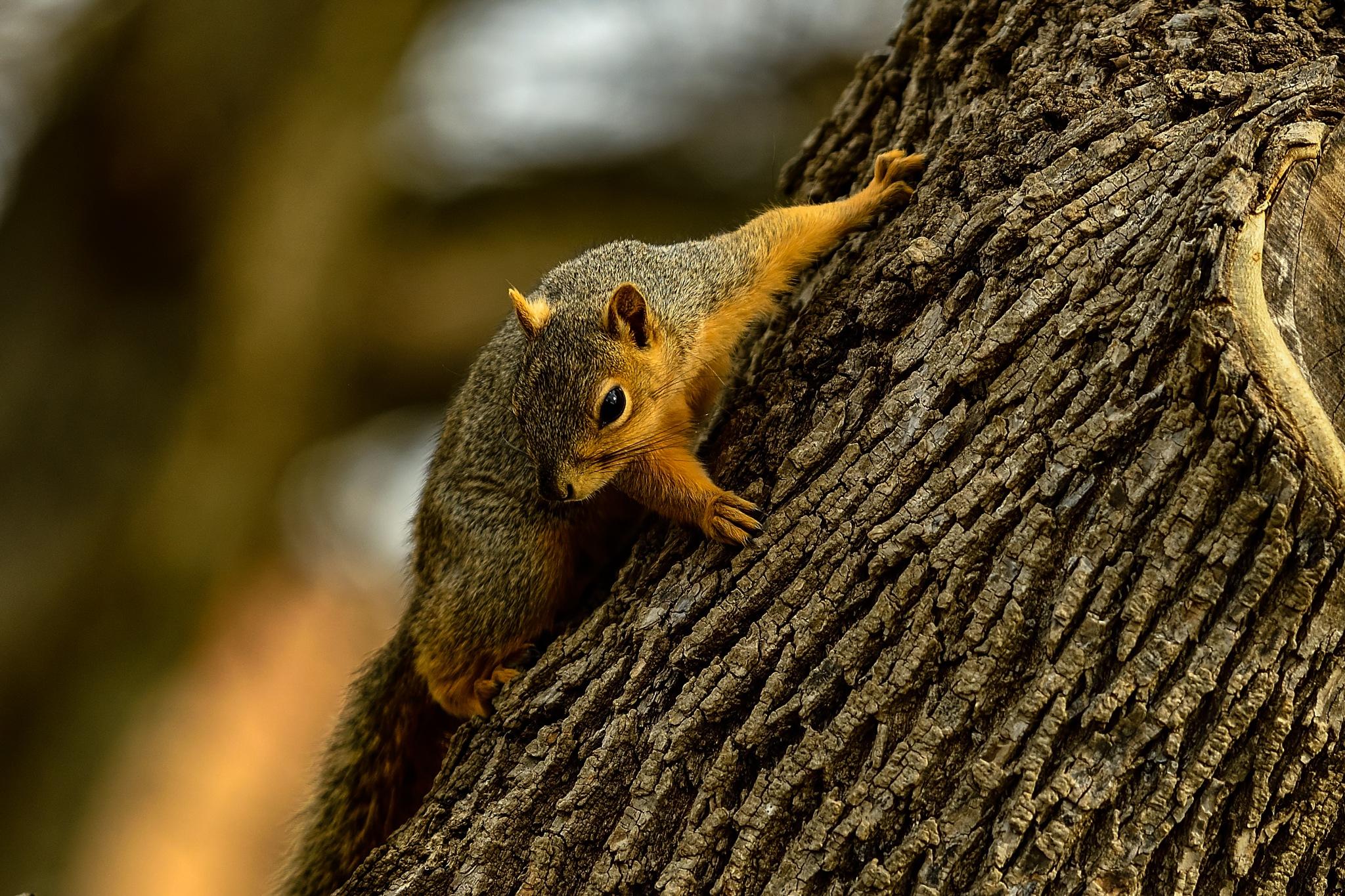 Photo in Animal #squirrel #animal #winter #watching