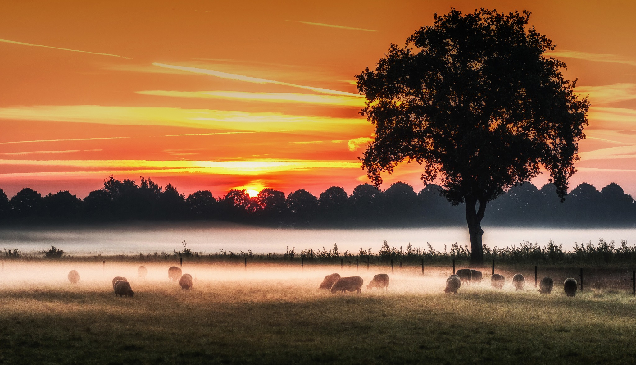 Sheep in misty sunrise by Theo Hermsen