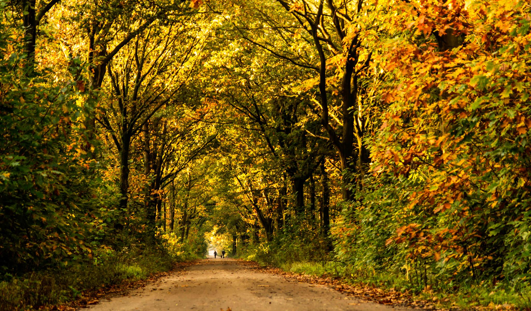 autumn by Theo Hermsen