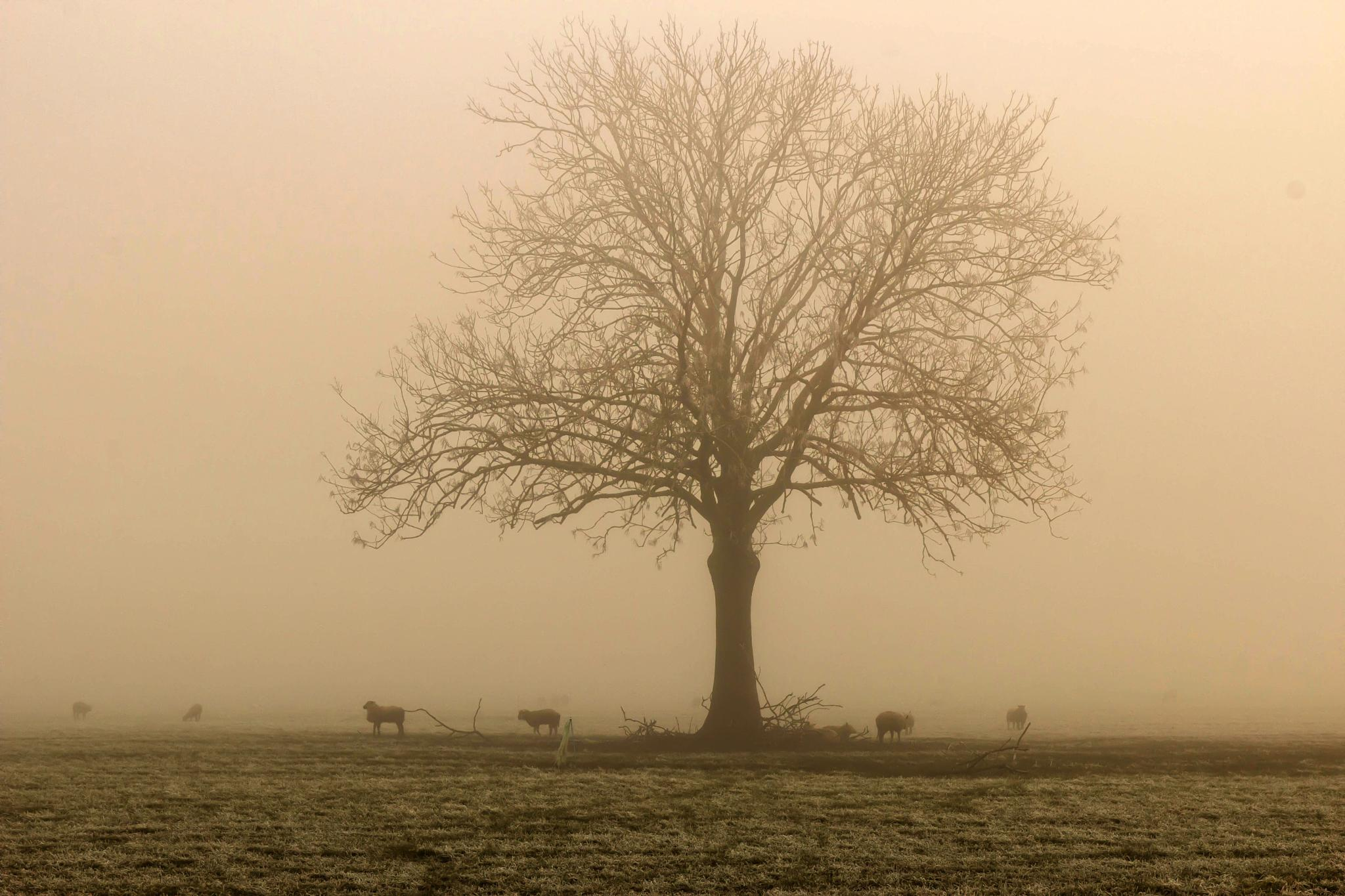 fog by Theo Hermsen
