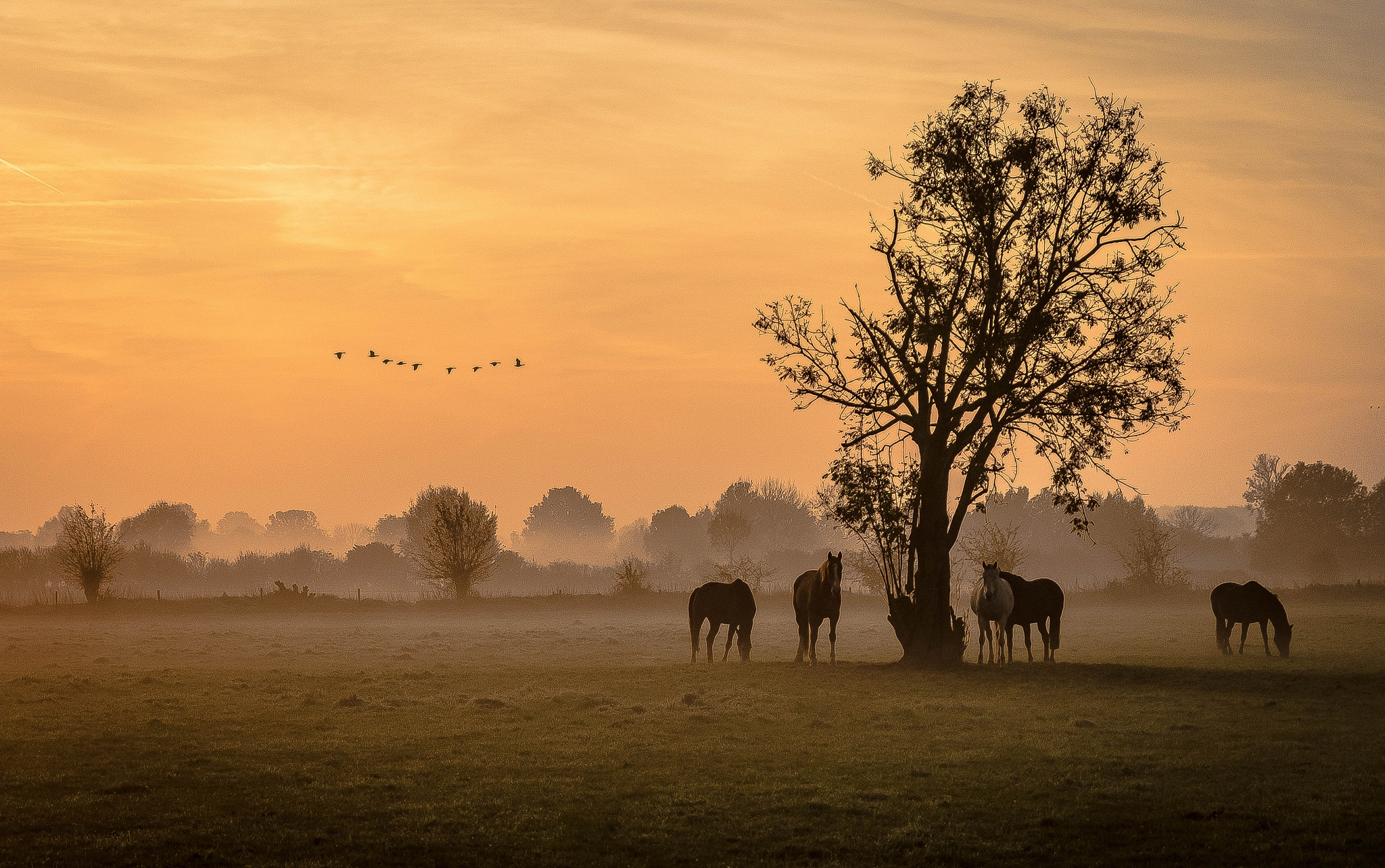 A beautiful morning with horses on pasture by Theo Hermsen