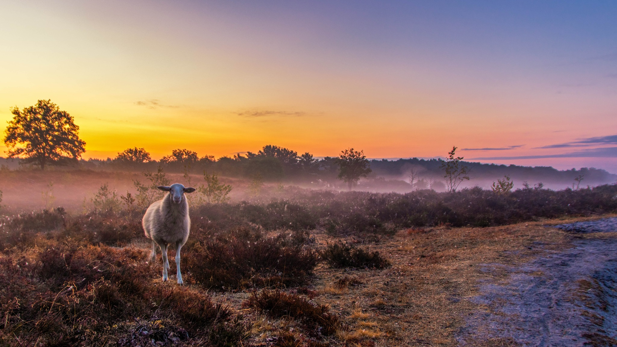 foggy sunrise by Theo Hermsen