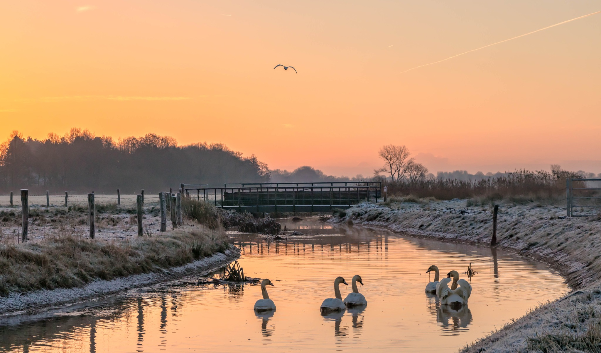 Swans at sunrise by Theo Hermsen