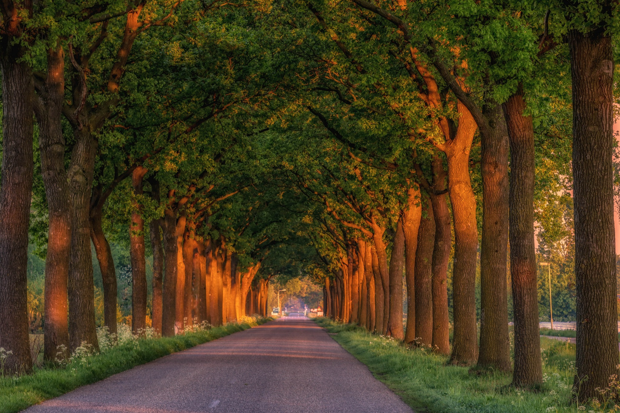 Tunnel of Trees by Theo Hermsen