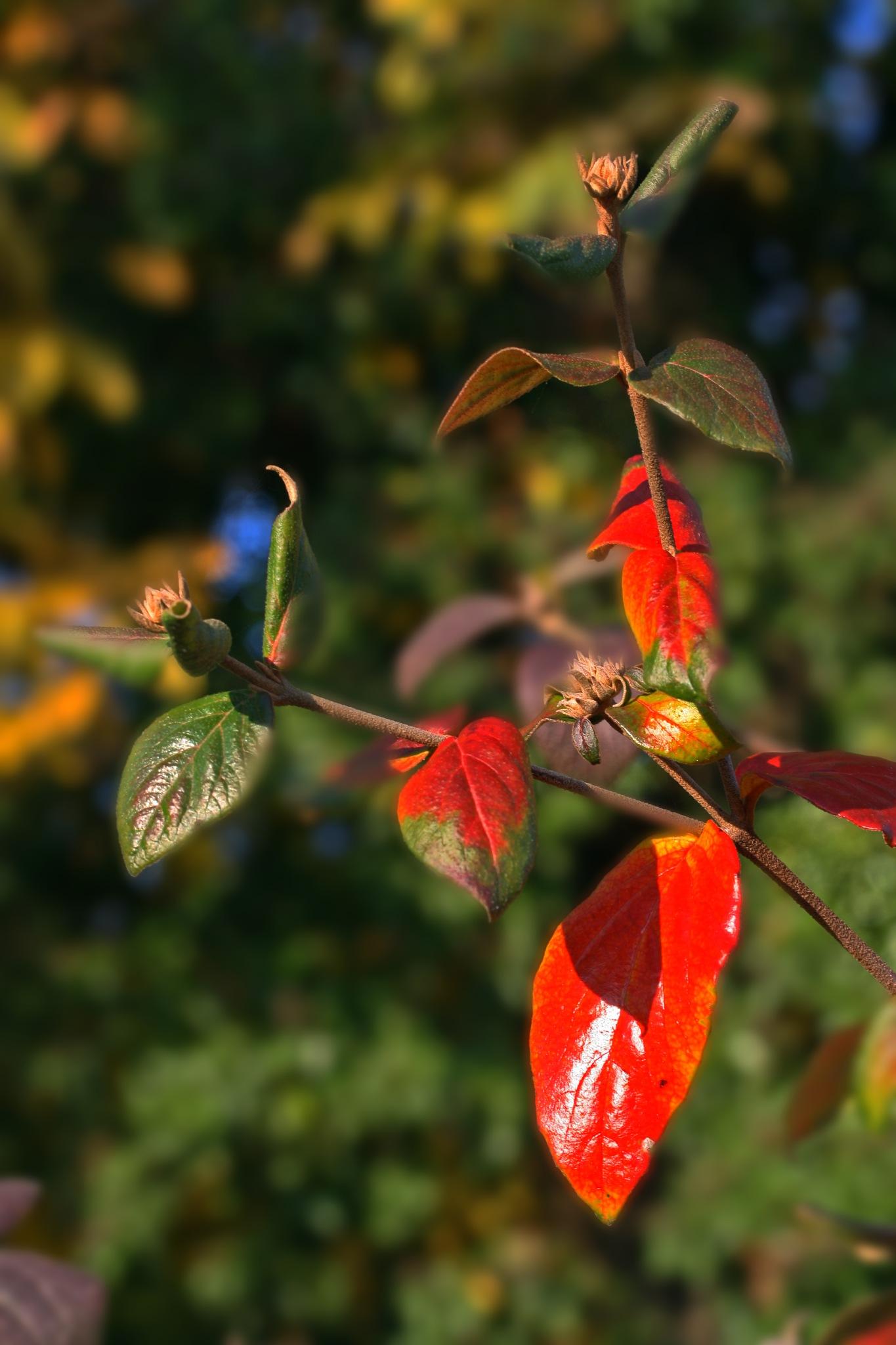 Herbstimpression by Jean P. Mundorff