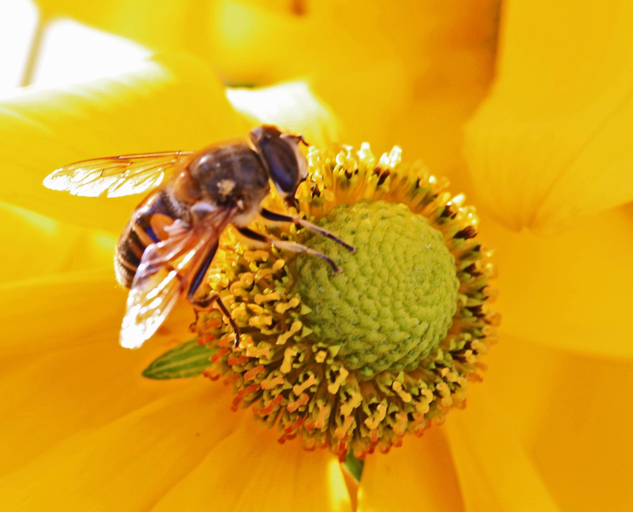 Bee by Jean P. Mundorff