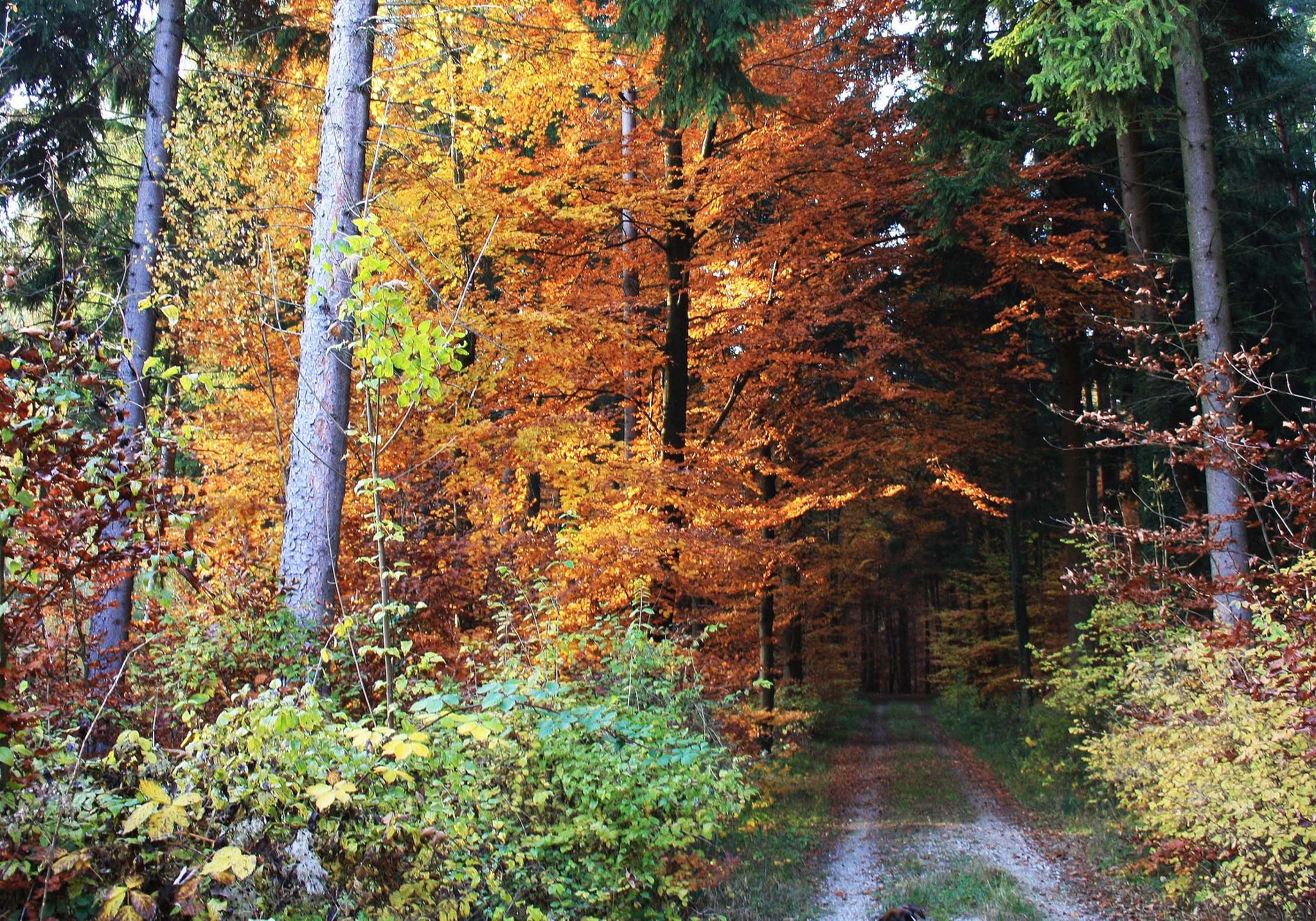 Herbst by Jean P. Mundorff