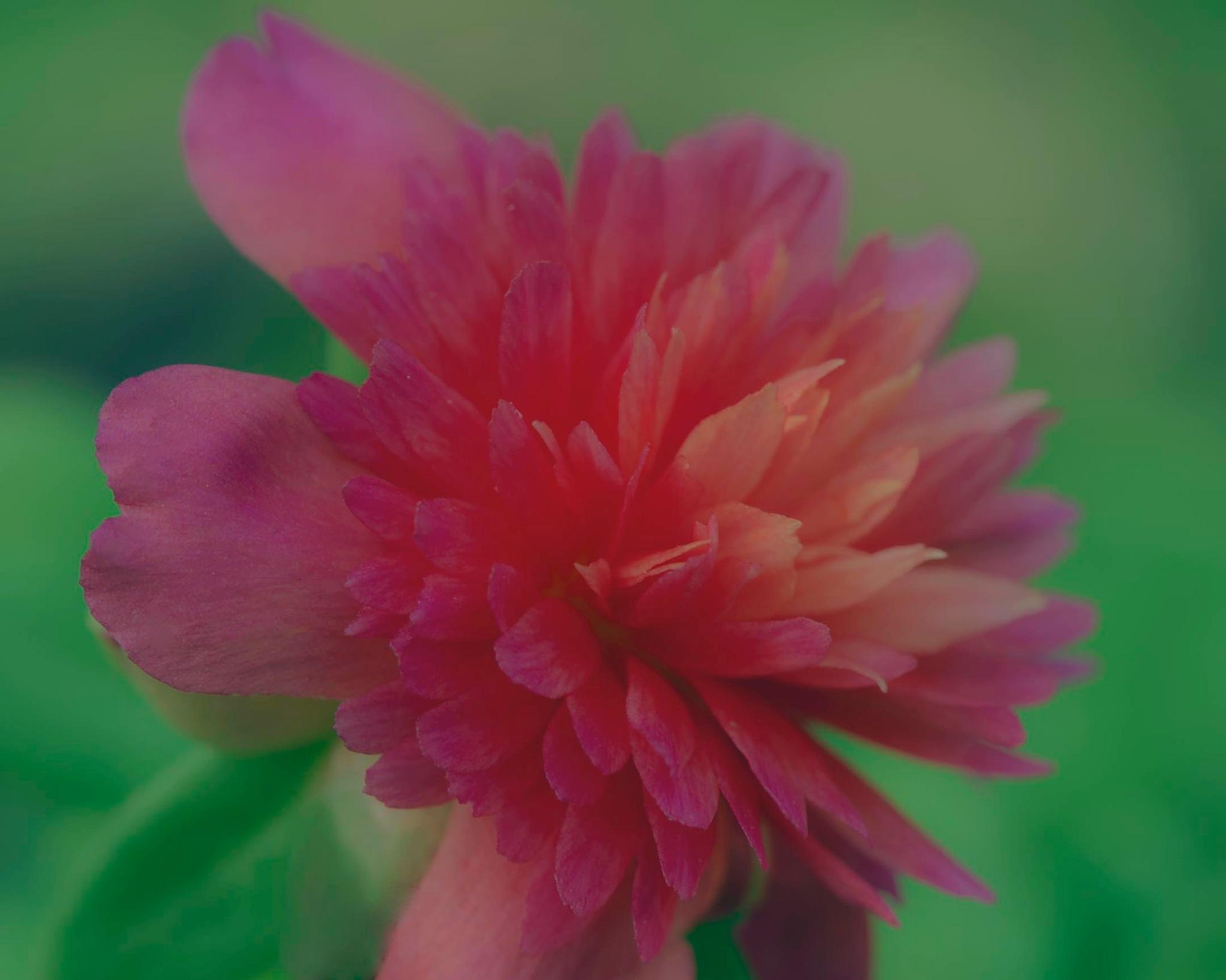 back Yard Flower by BobbyLindley