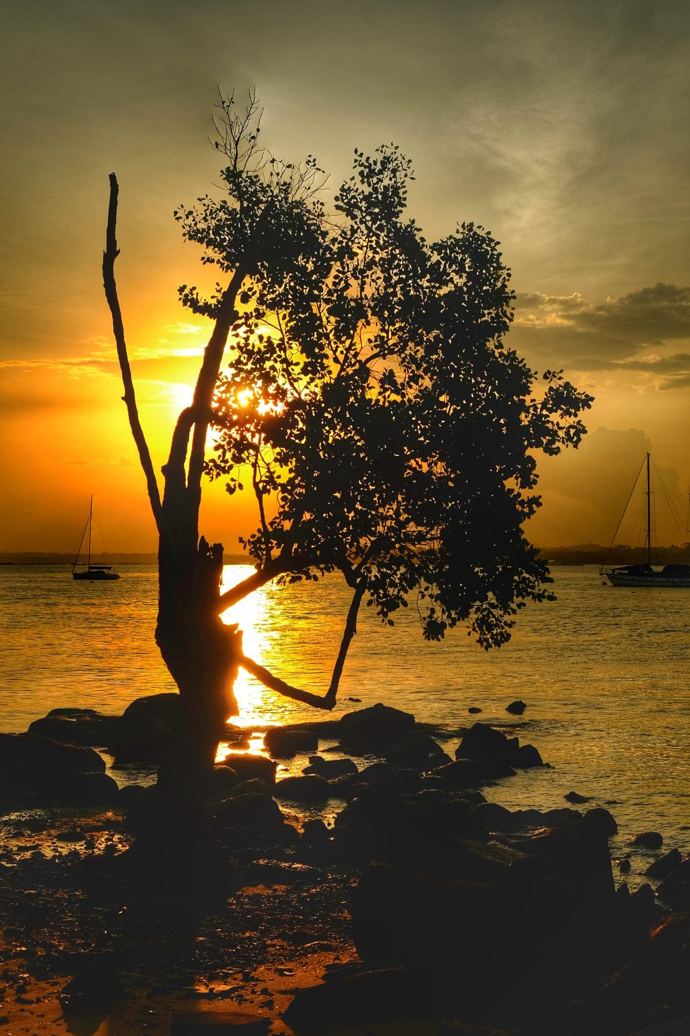 The Tree by Matthew Ng