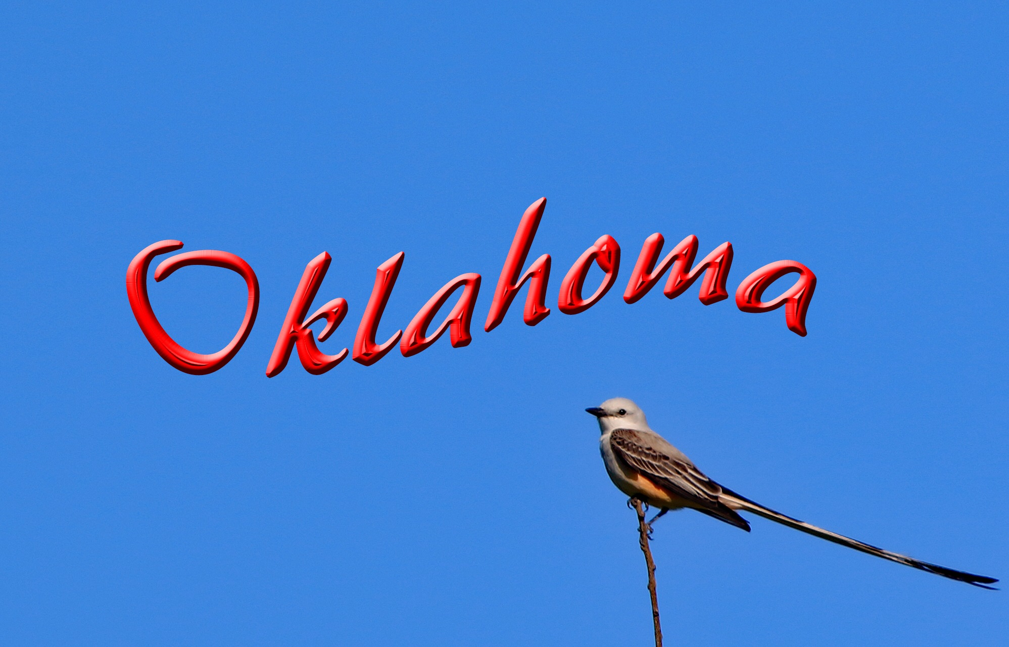 Oklahoma State Bird by David M.