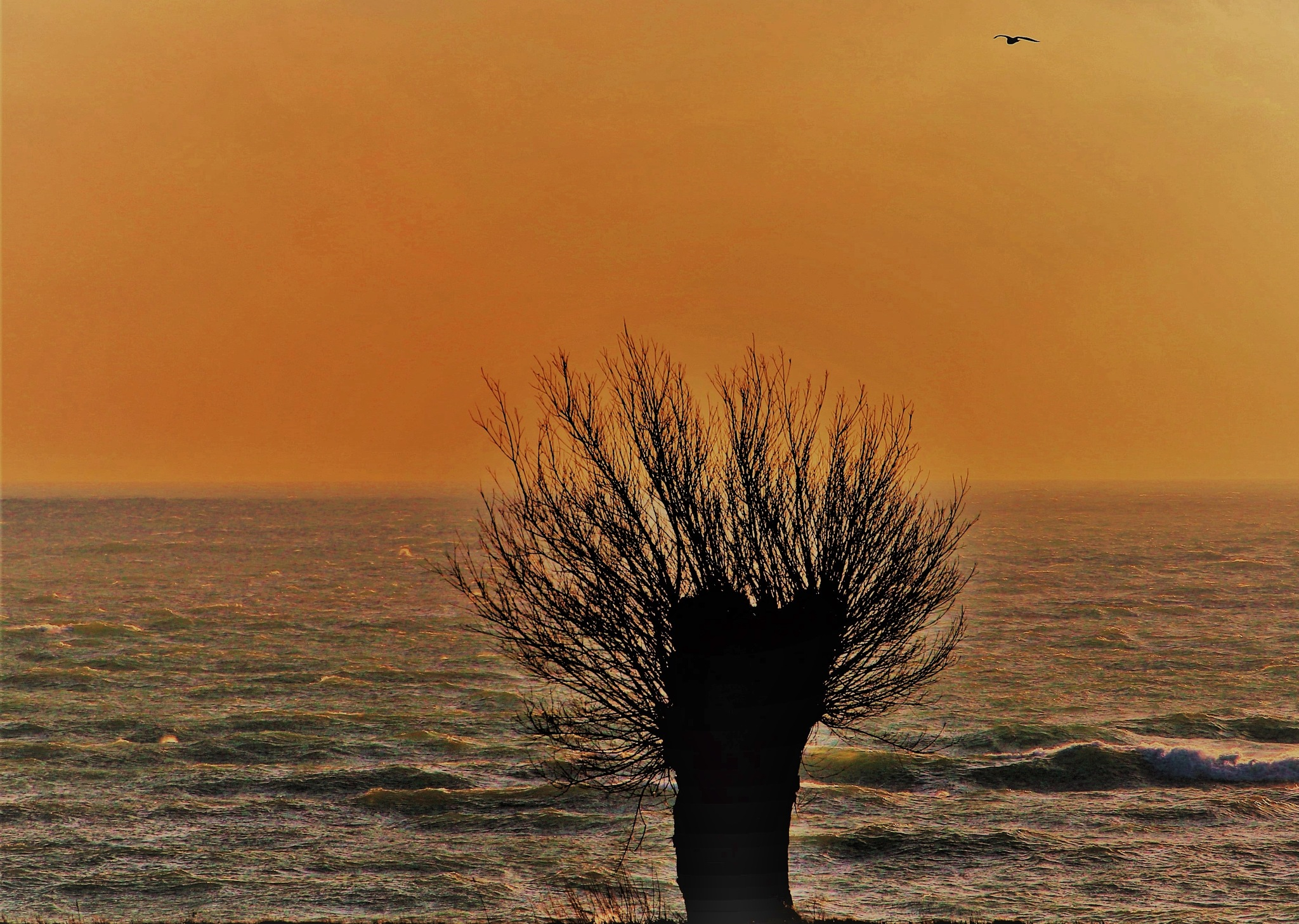 A tree at the Beach. by KerstinP.